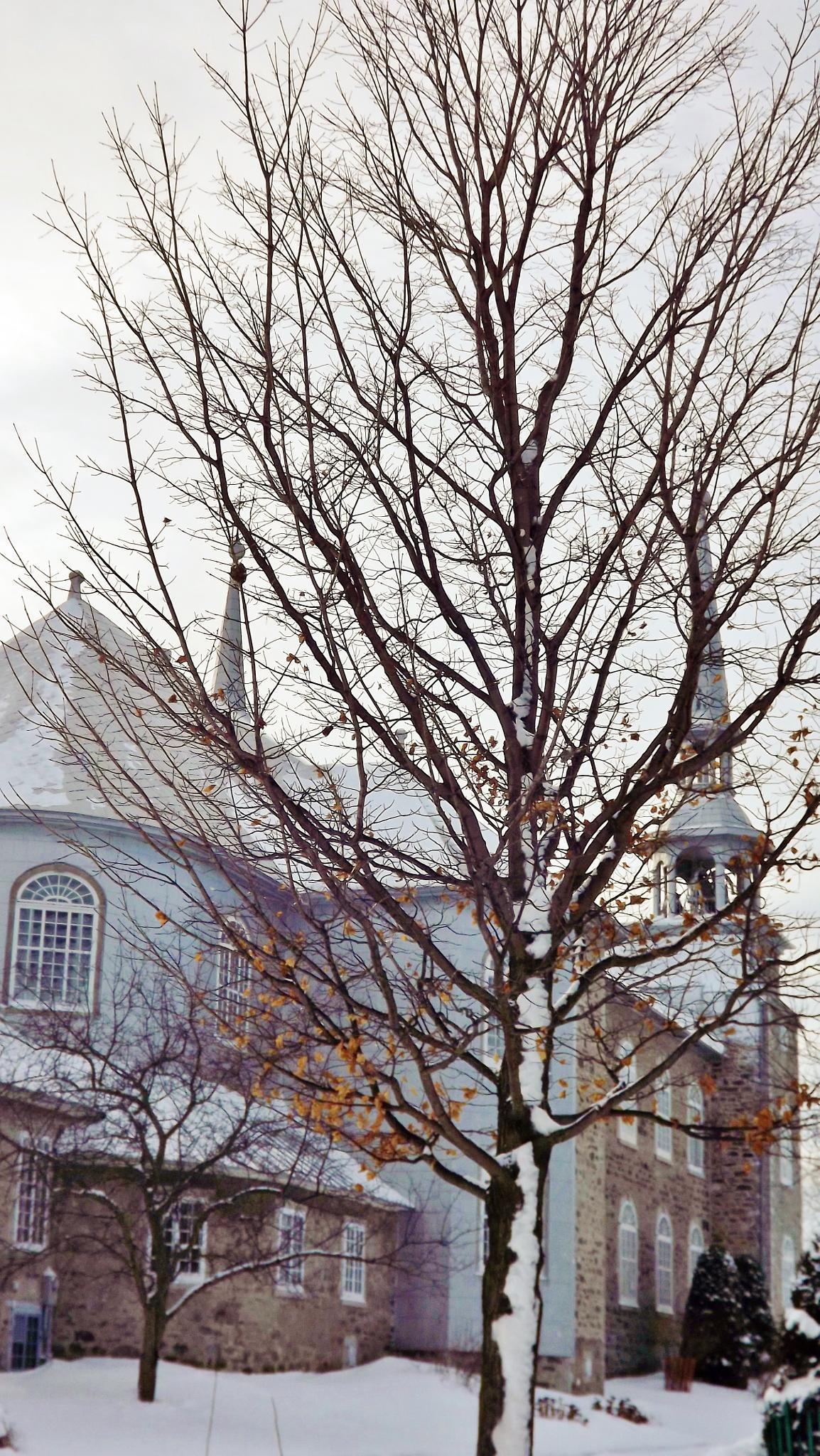 L'arbre sans ses feuilles à Deschambault by real.michaud.5036