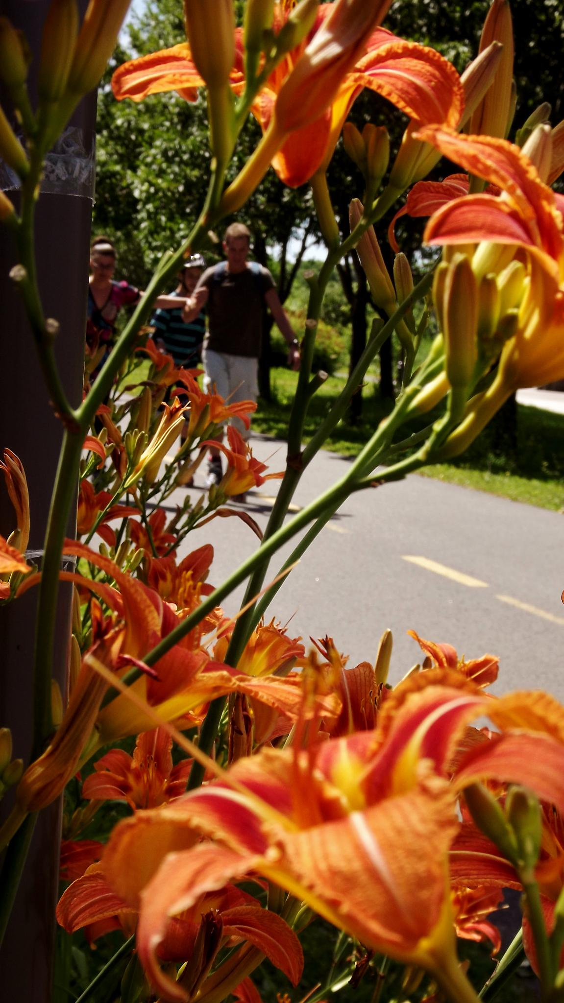 Walking along flowers by real.michaud.5036