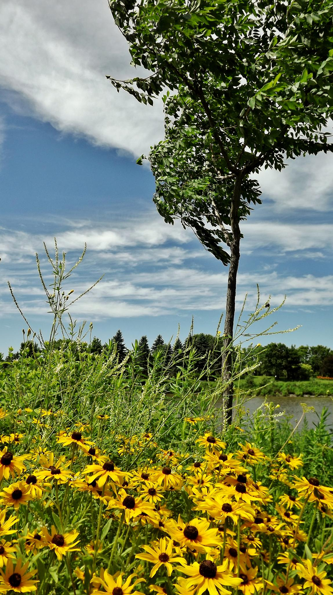 Flowers & river by real.michaud.5036