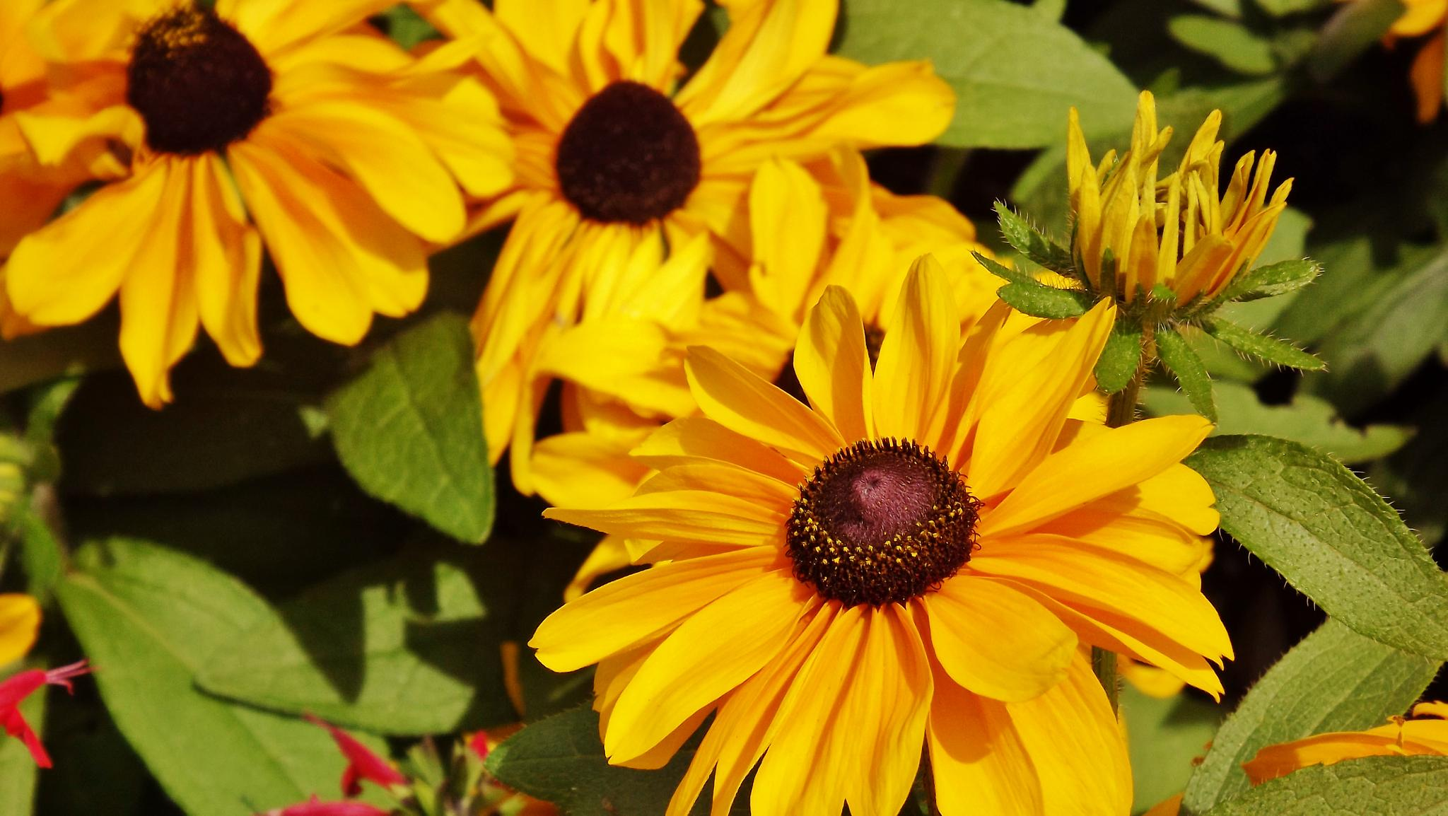 Yellows flowers by real.michaud.5036