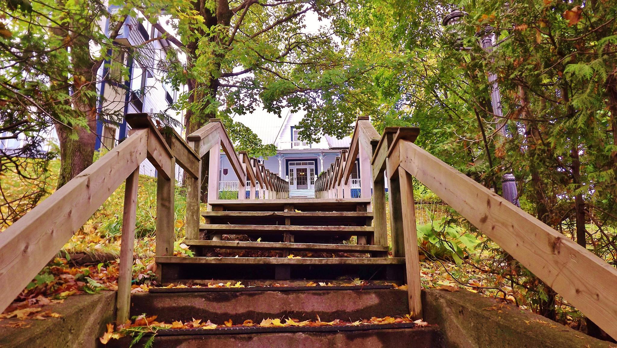Wood stairs Gaspé Gaspésie by real.michaud.5036
