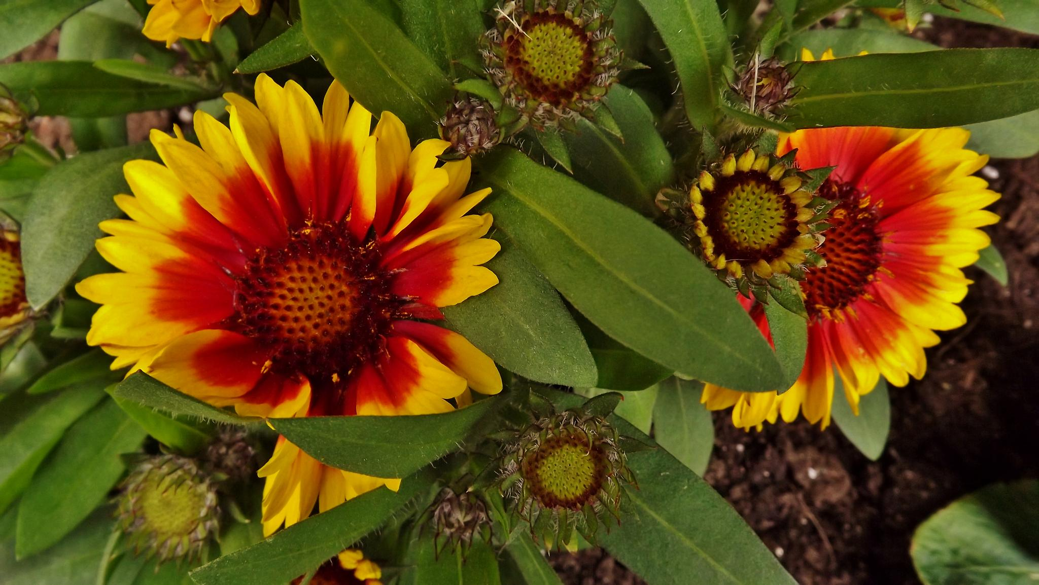 Flowers coloured by real.michaud.5036