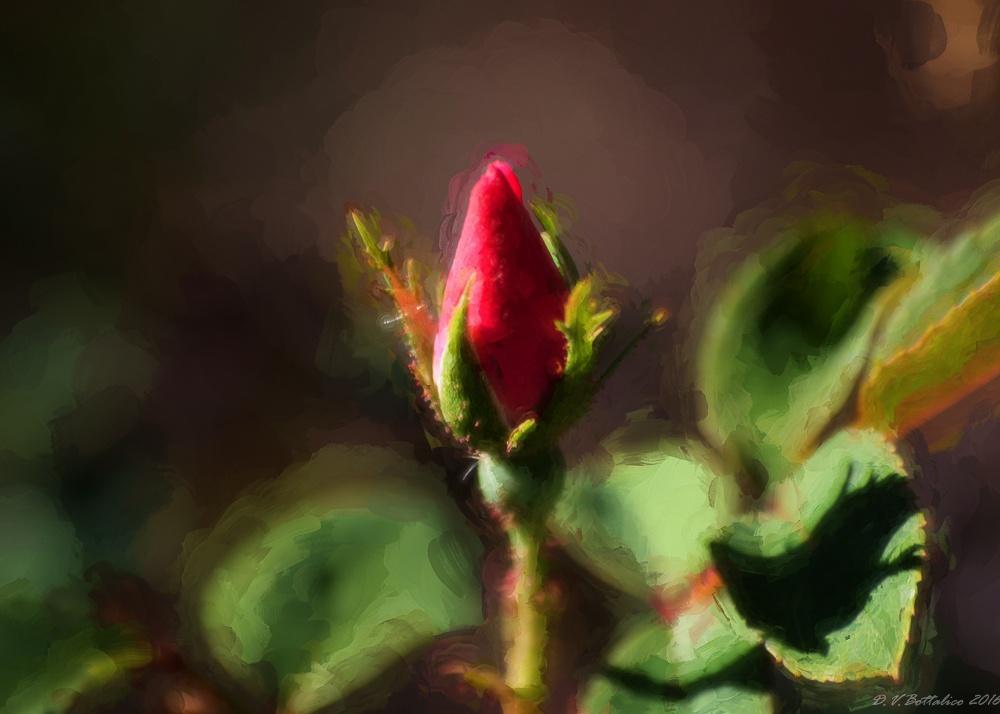 Rose Bud  by Doug Bottalico