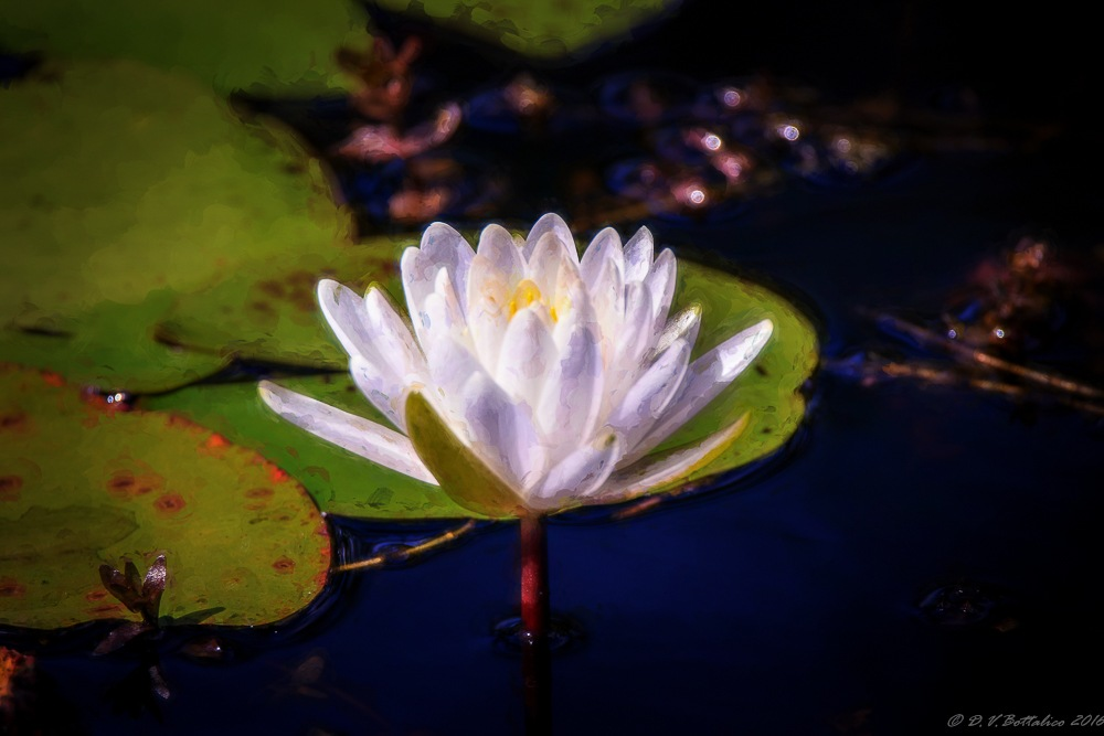 Lily by Doug Bottalico