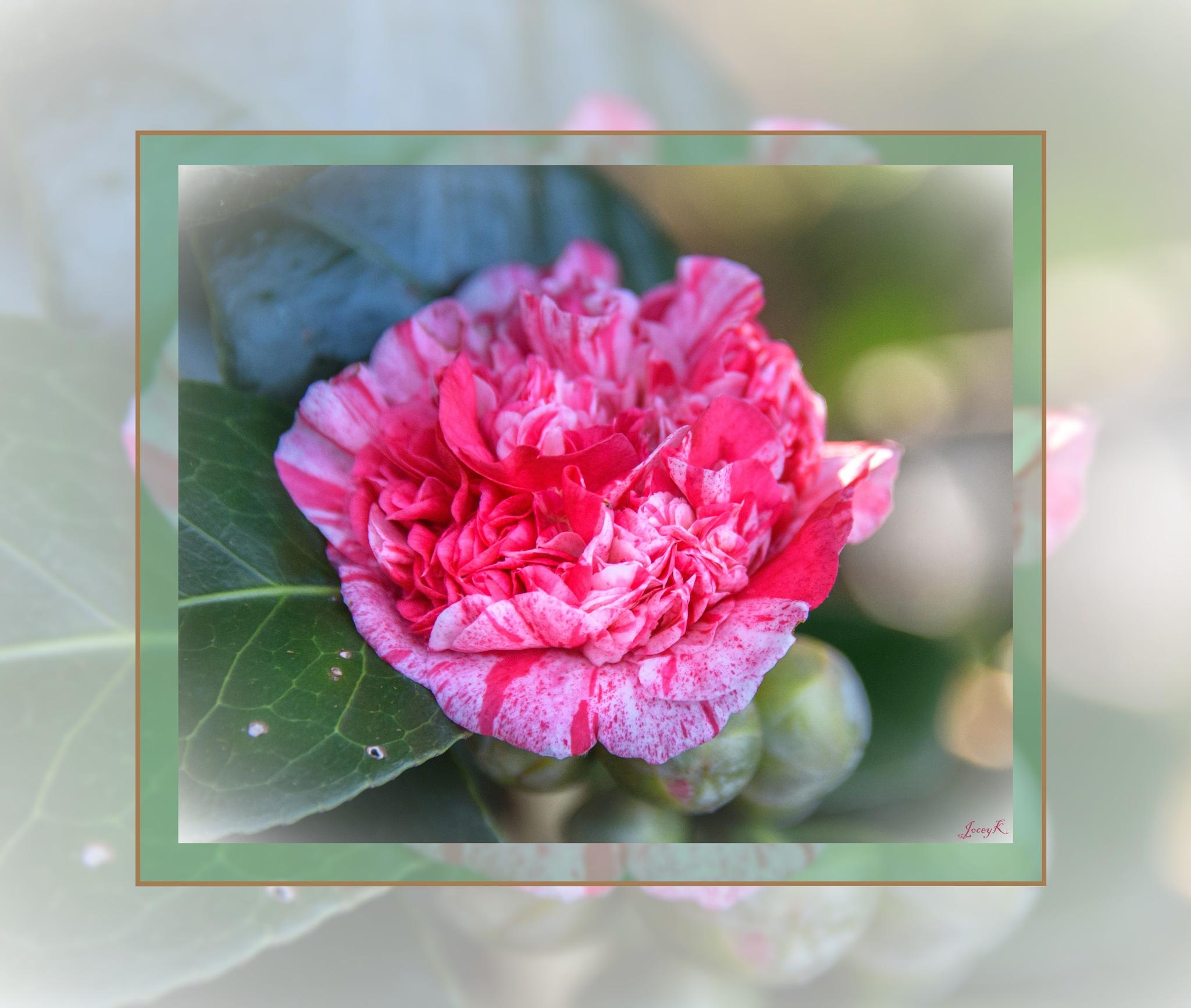 Raspberry Ripple by Jocelyn Kinghorn