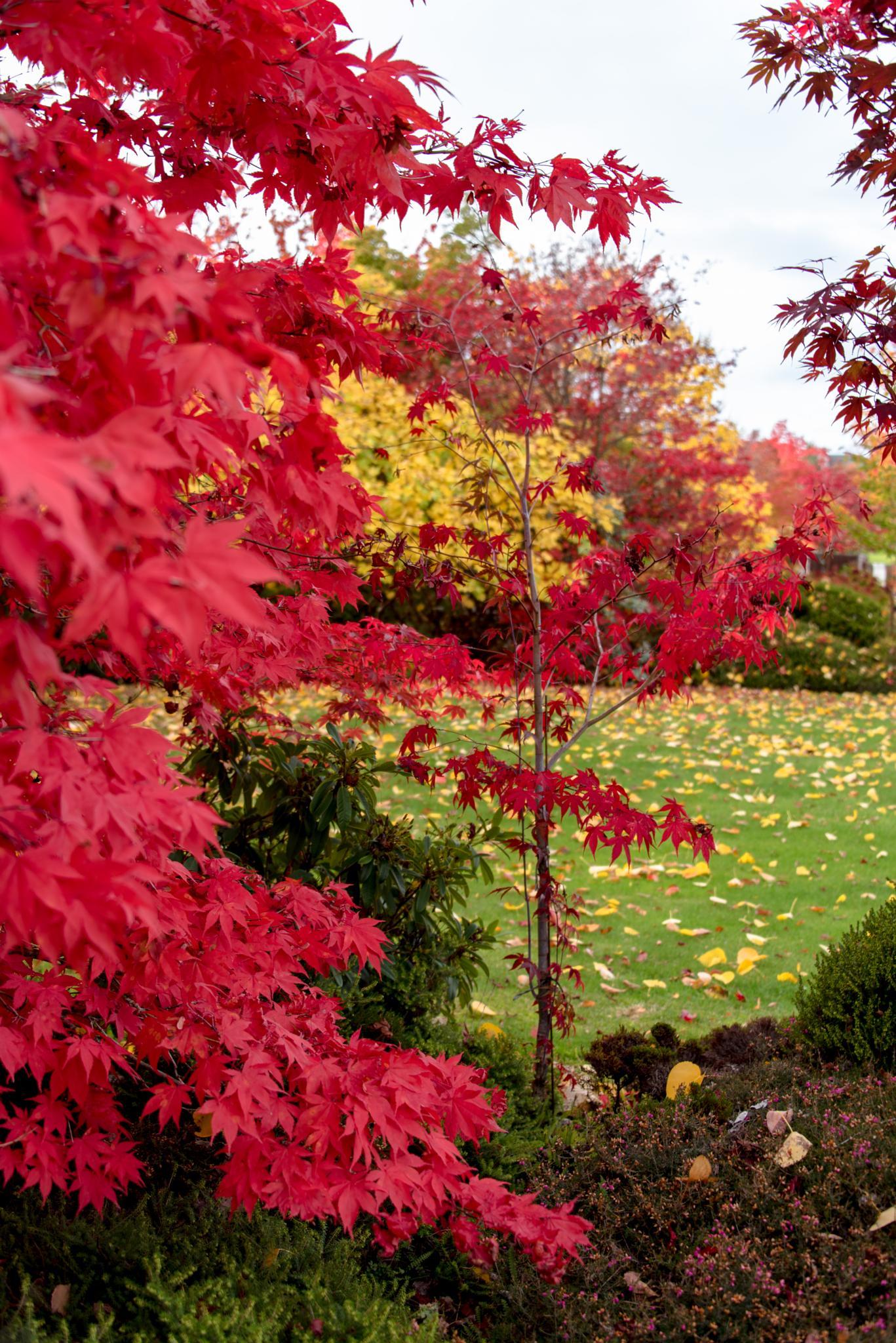 Autumn in Wanaka by Jocelyn Kinghorn