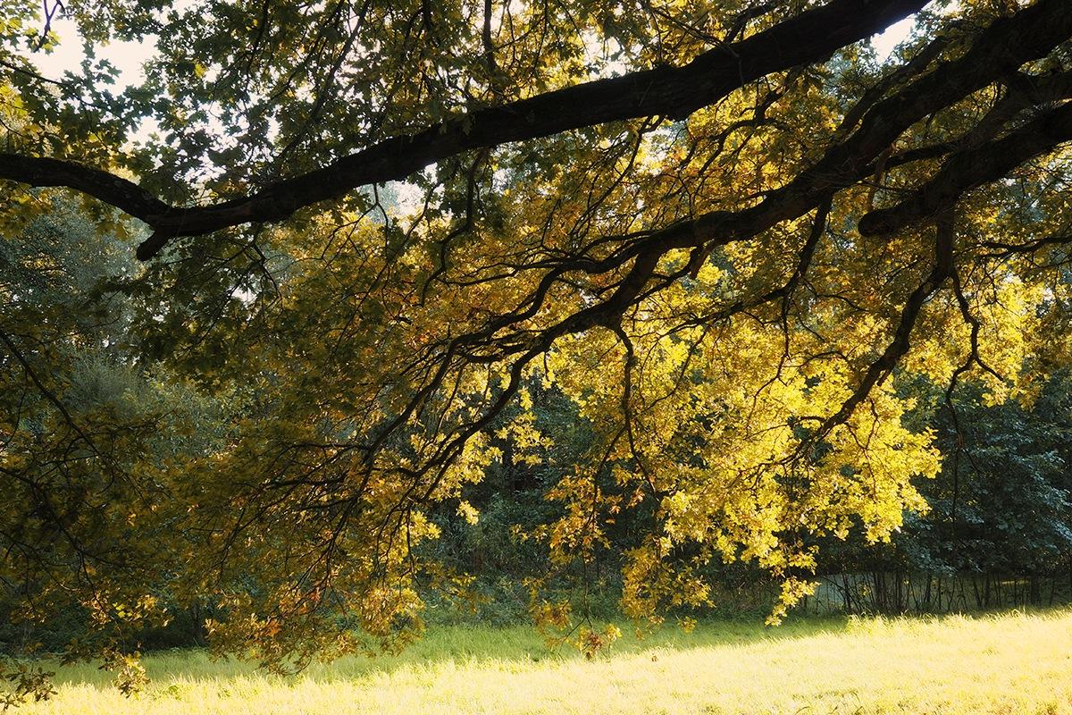 autumn light ... by Agfa Scala ...the eye