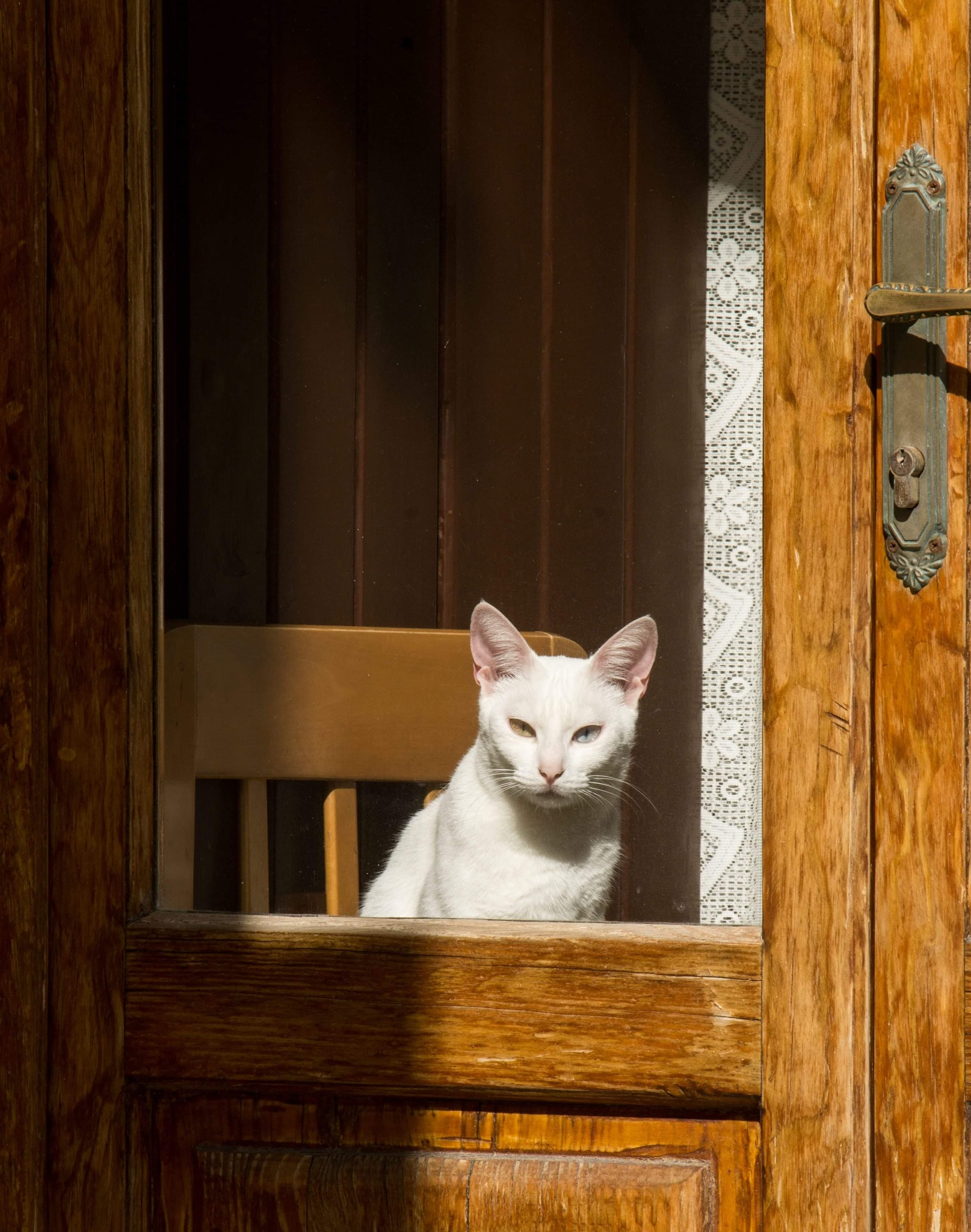 cat at the window by Nicola Magaletti