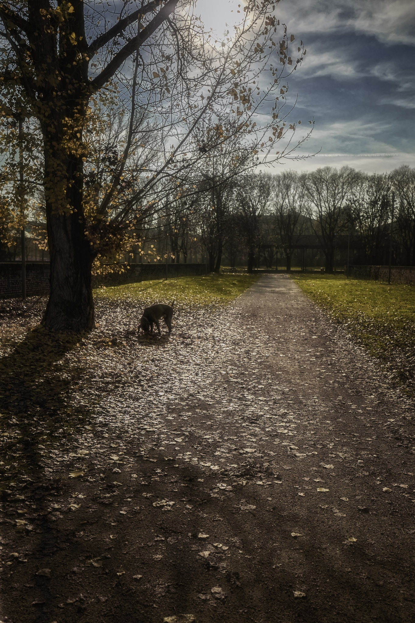 Dog in the park by frank.leale.7