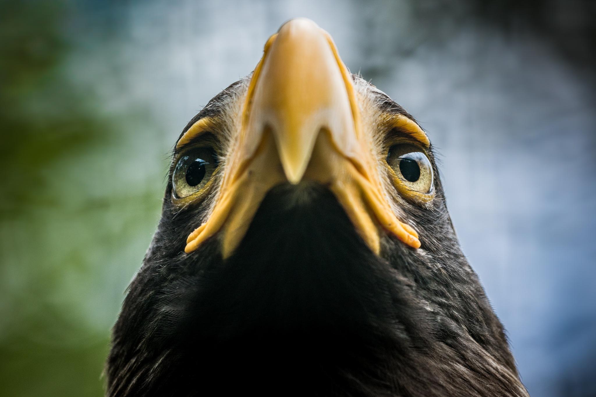 Eagle Eyes by fleosphoto