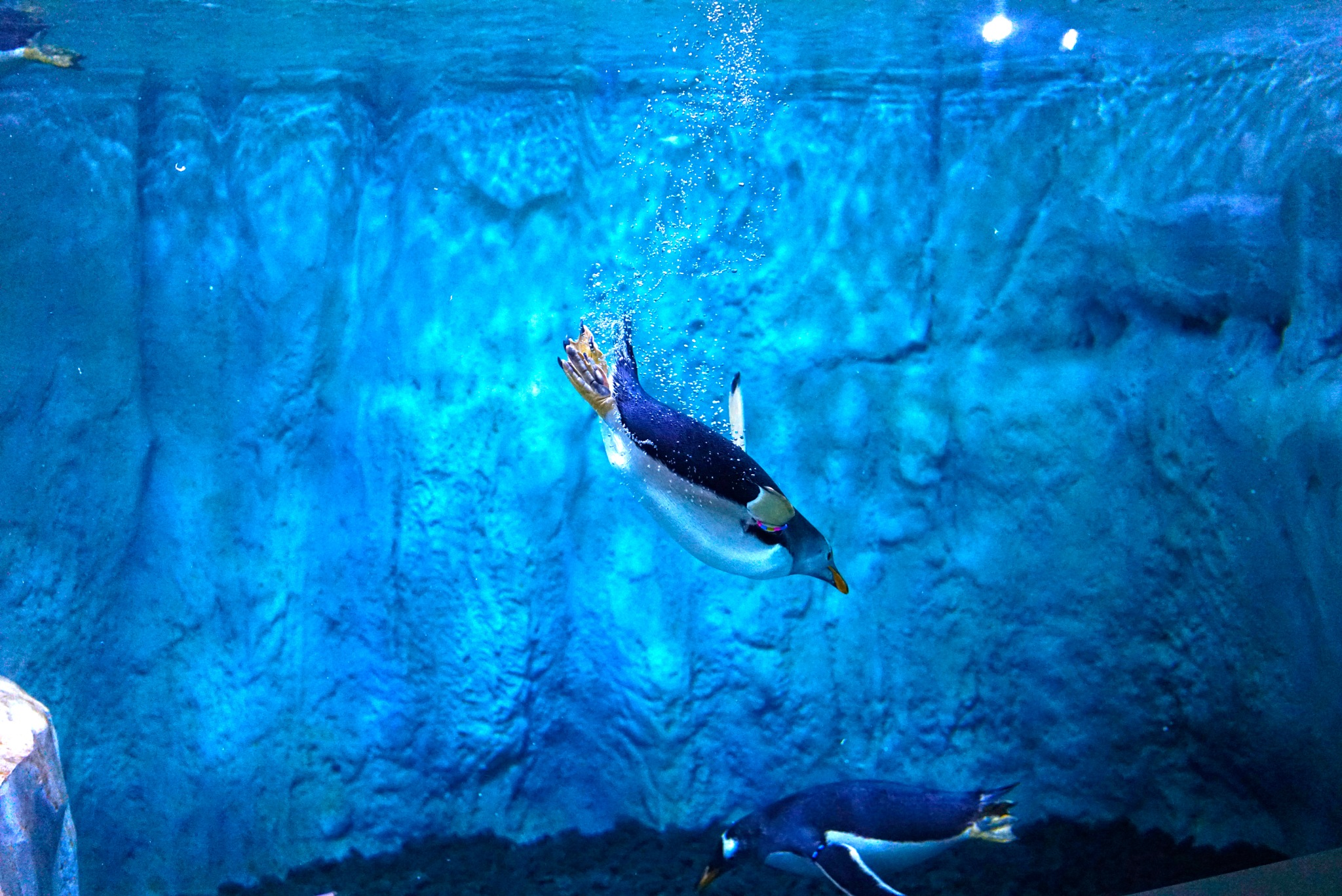 Pinguins by Blackhawk