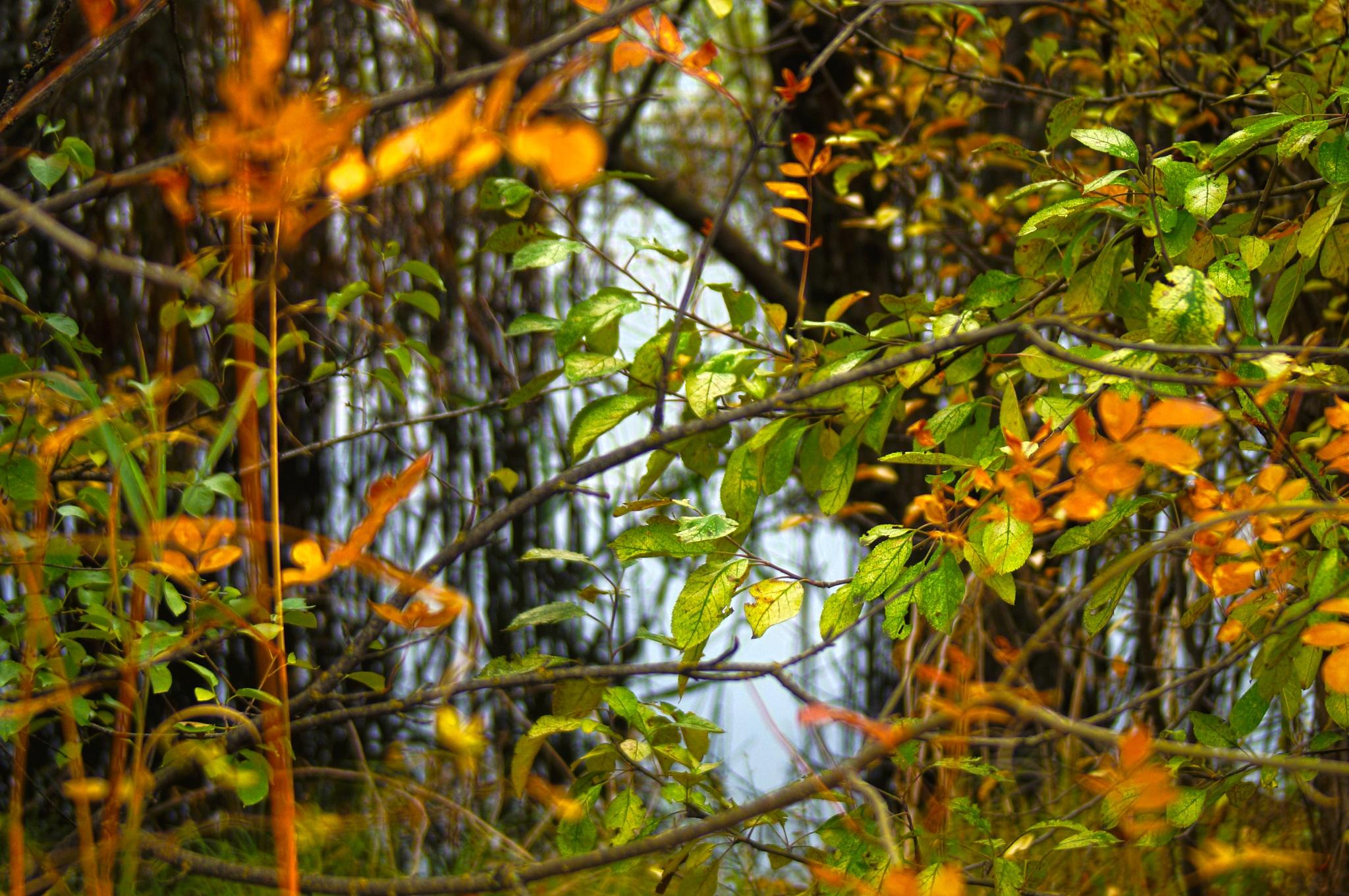 Green Curtain by Blackhawk
