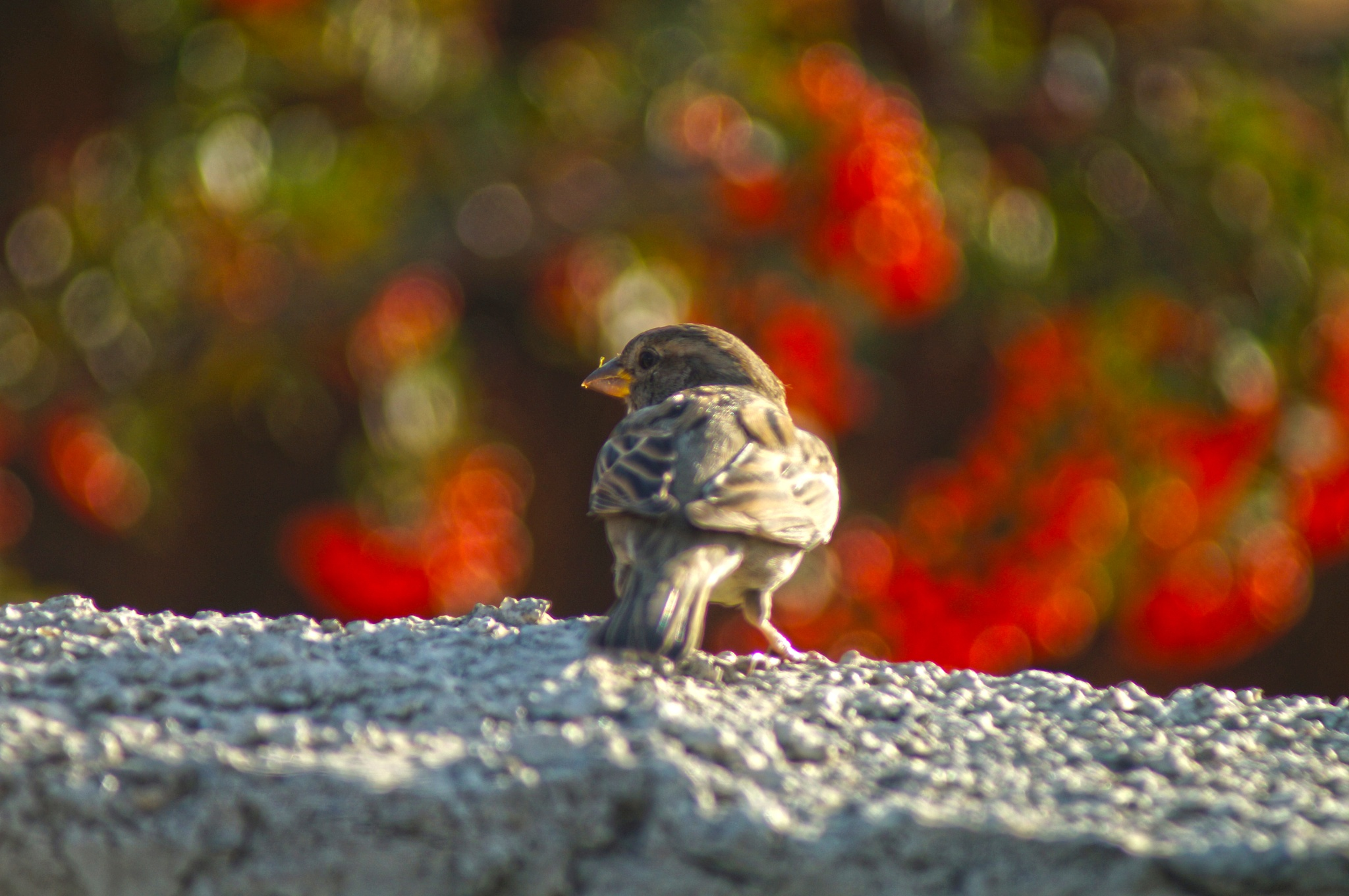 Sparrow by Blackhawk