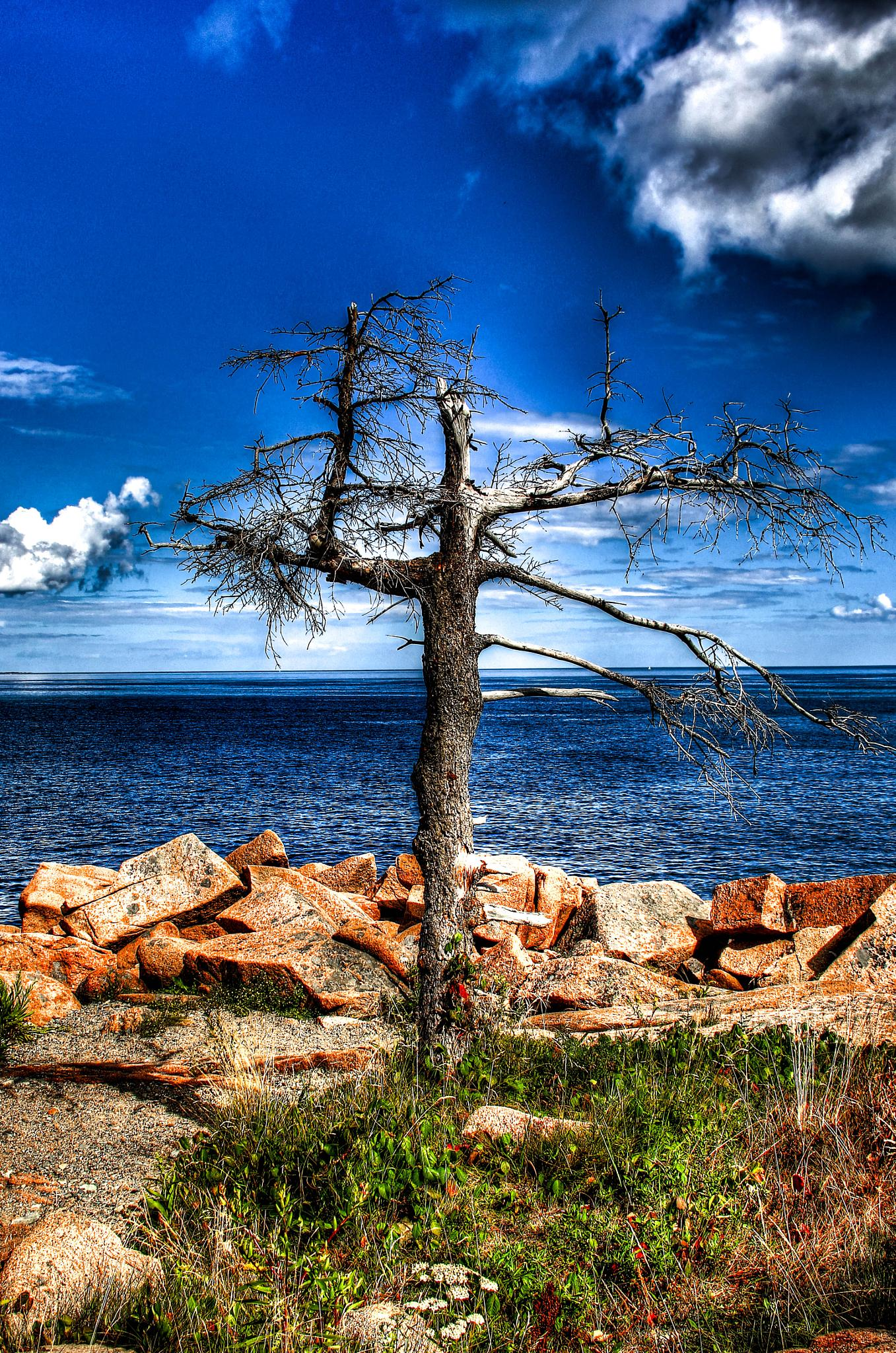Dead tree by Peggy Berger