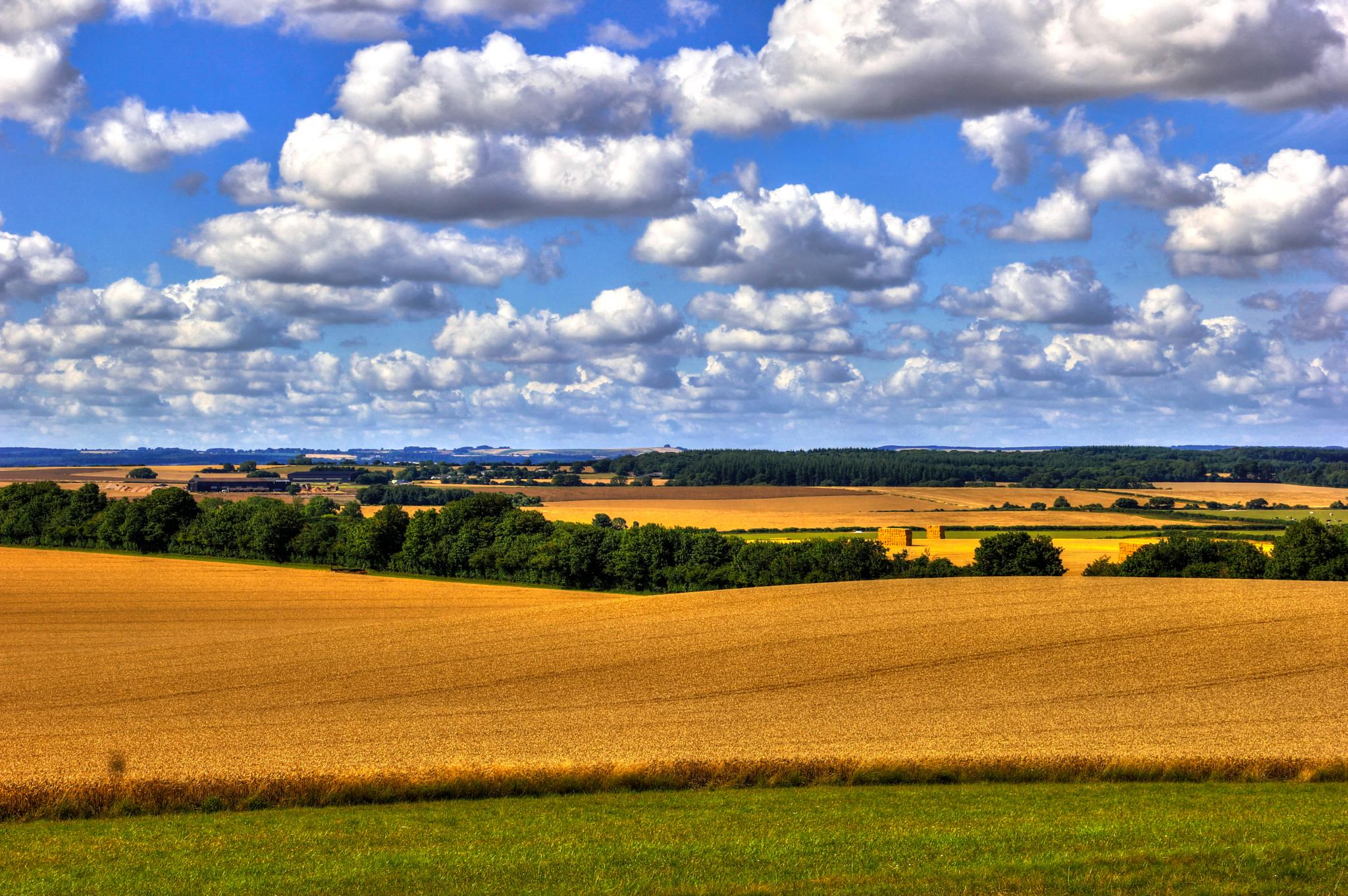 Dorset countryside in late July by Peggy Berger