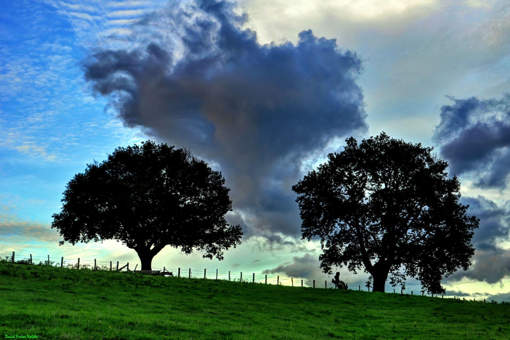 Trees against the horizon by davidferrervaldes