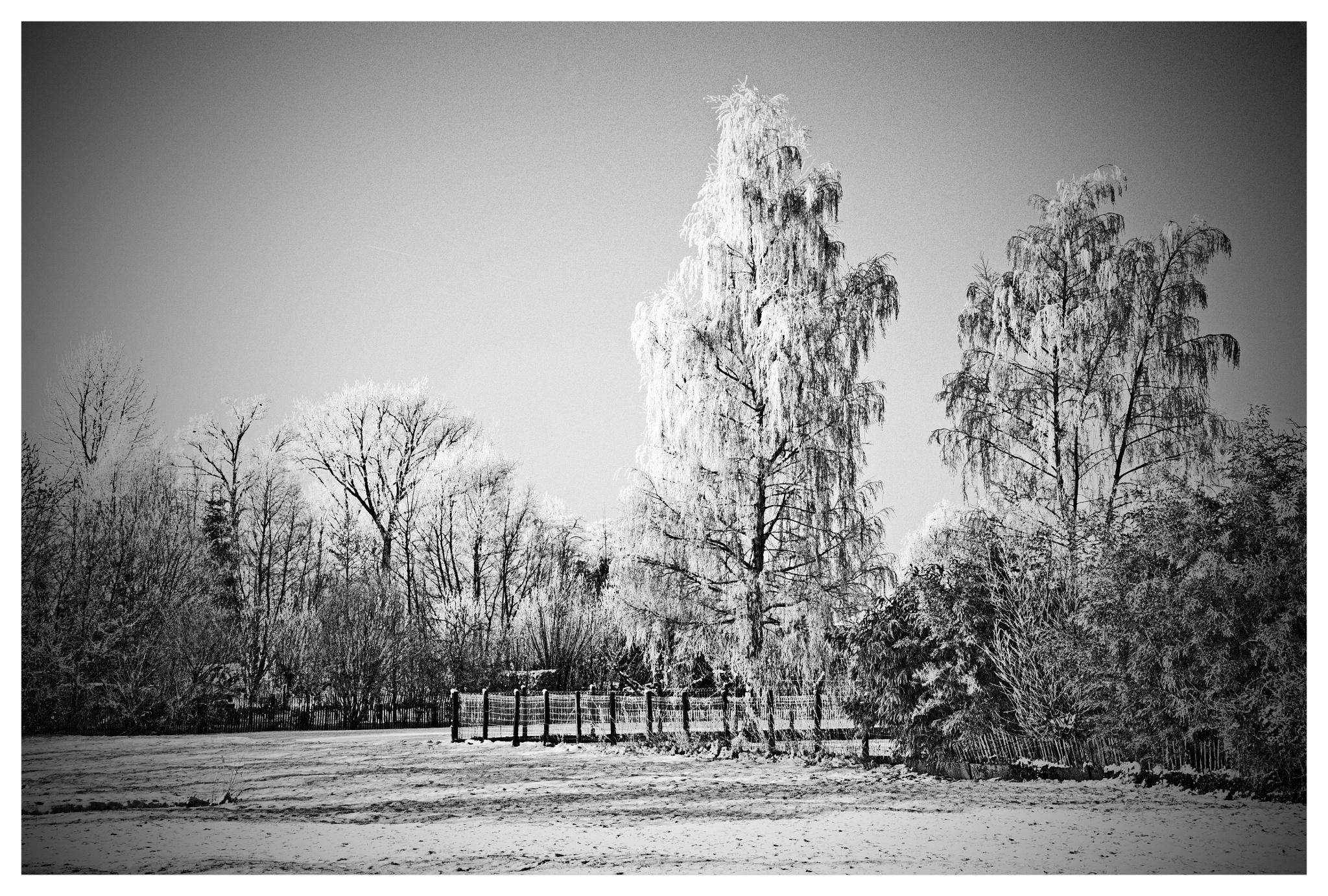 The end by Alfons Van Aerschot