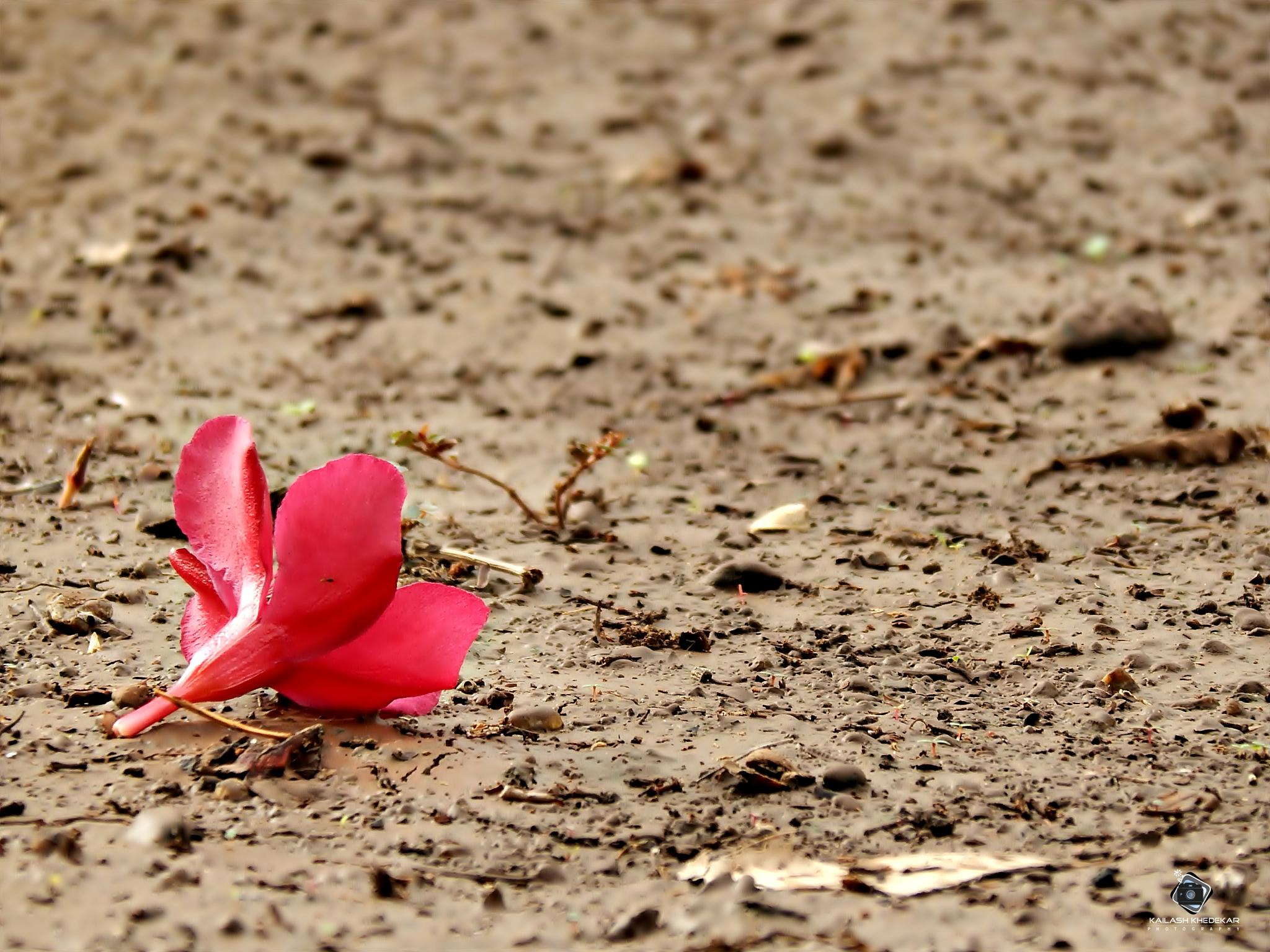 Falling....In love with earth..!! by kailashkhedekar