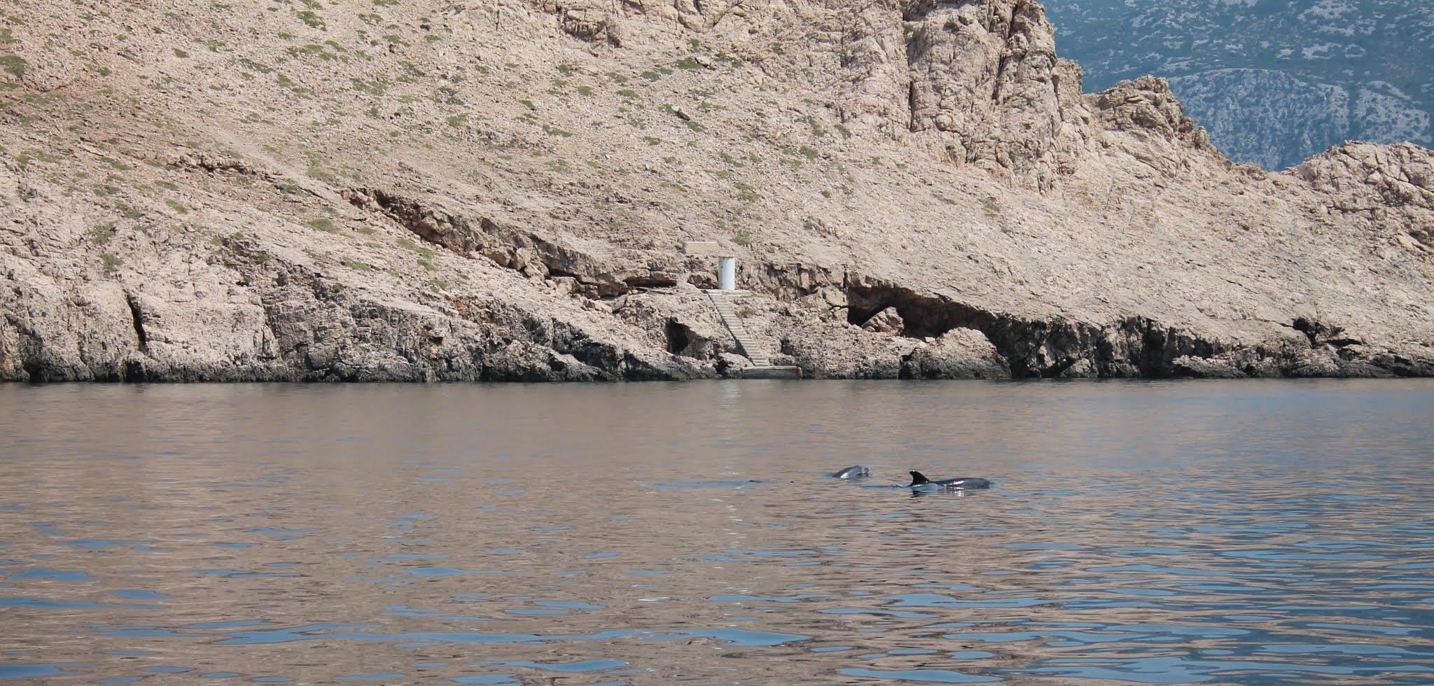 delfin by jasminkoherceg