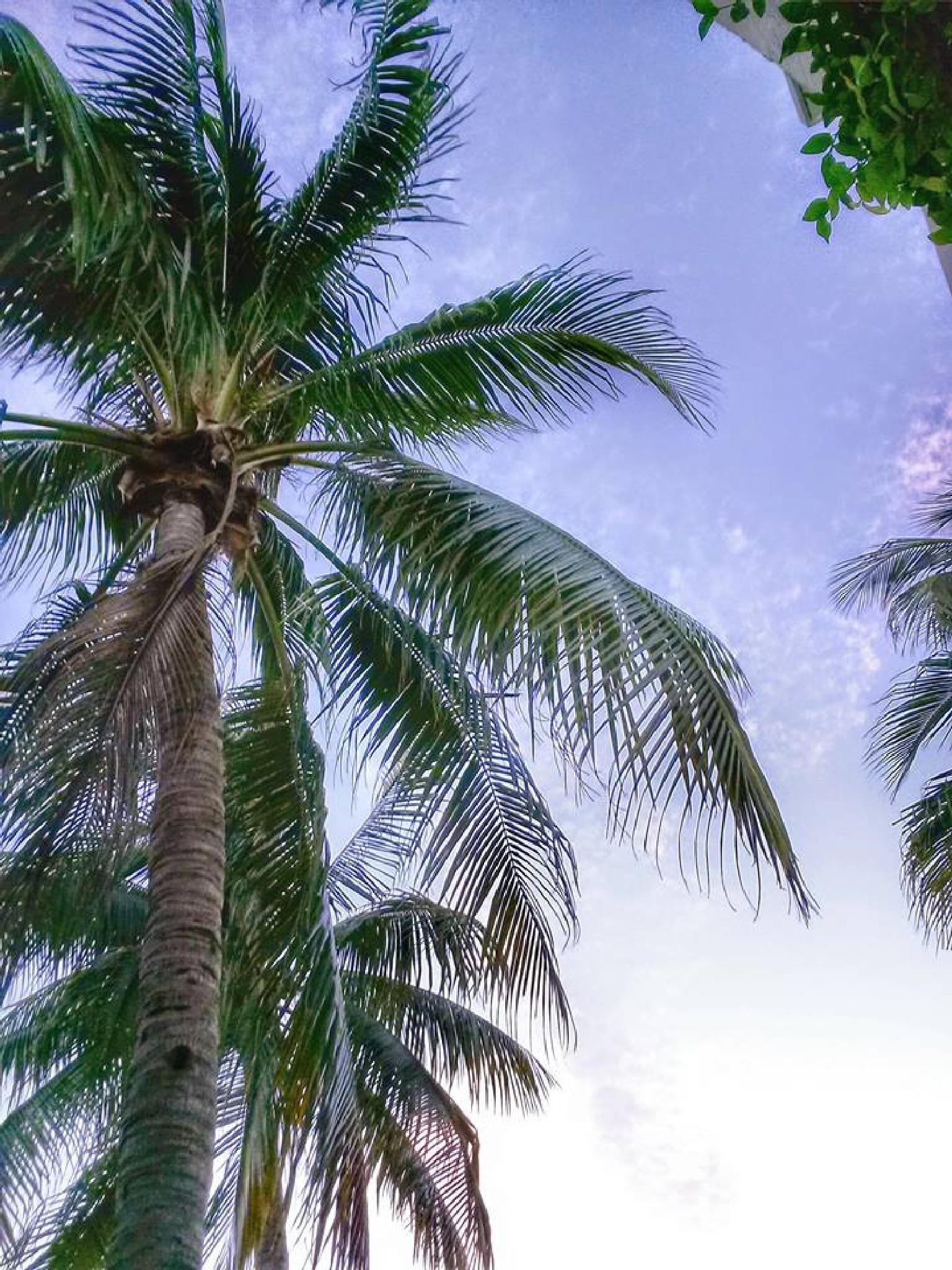 November Florida by JoeyZ