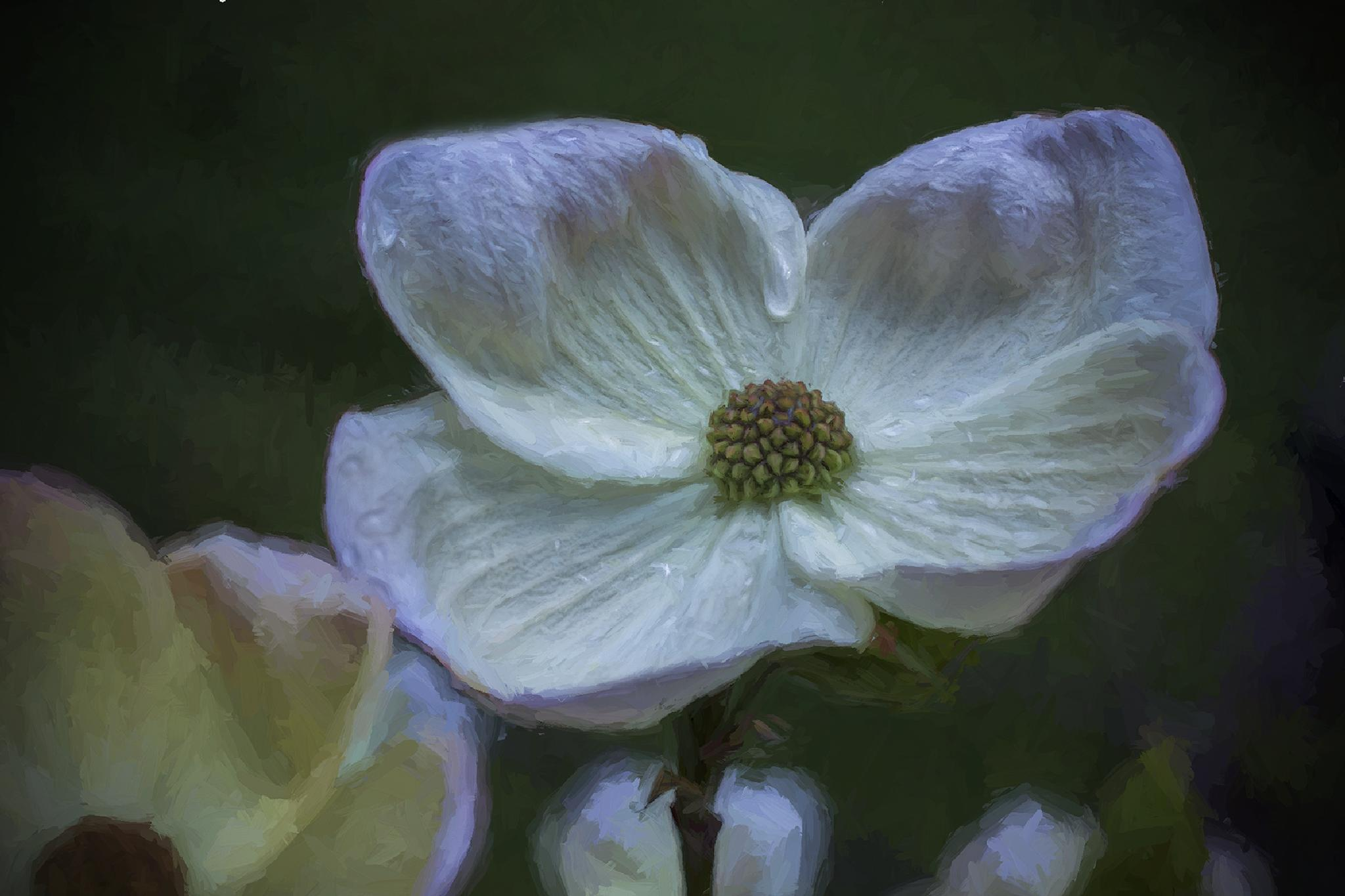 Dogwood Tier by lee.whiting.92