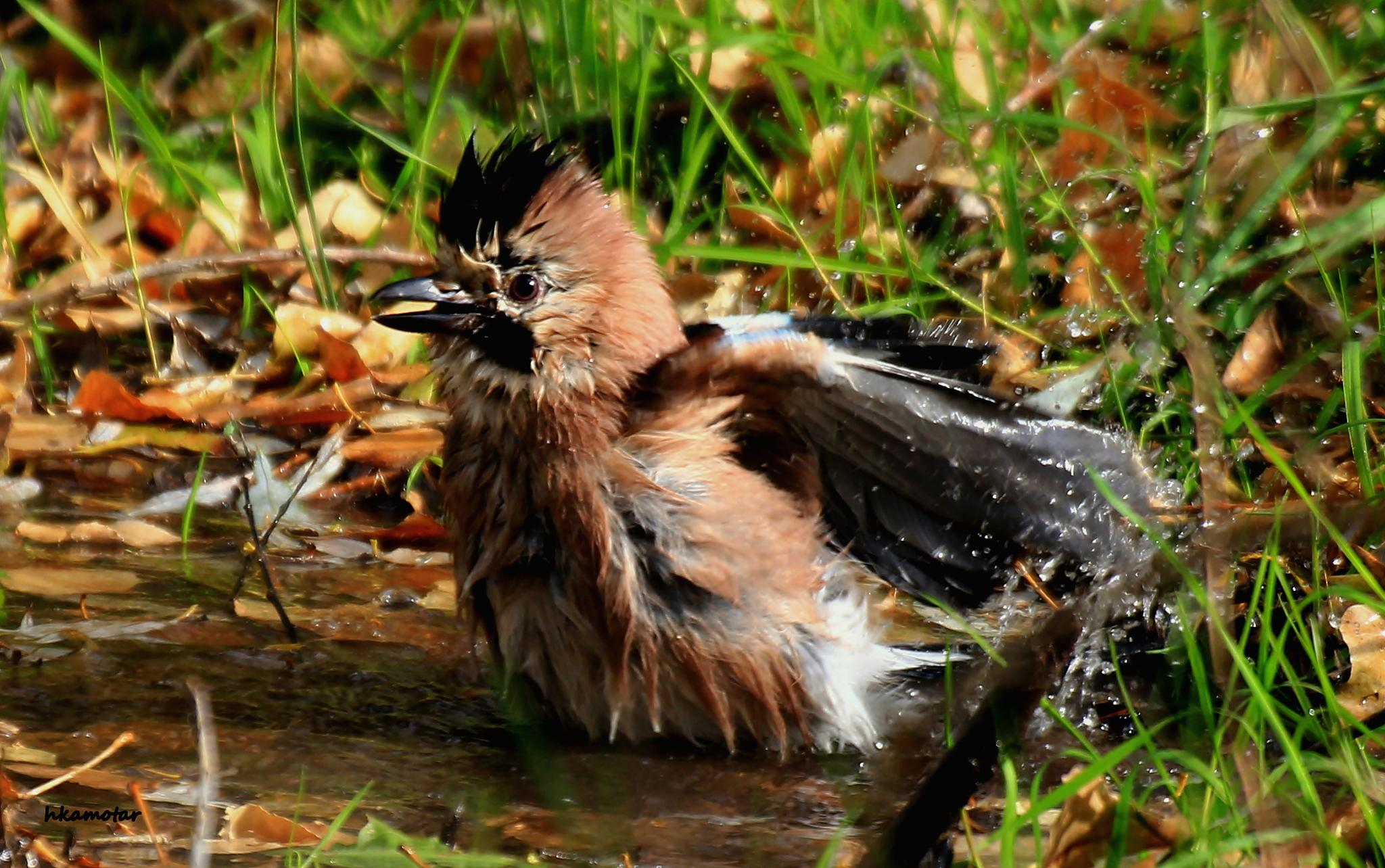 bath time... by harun