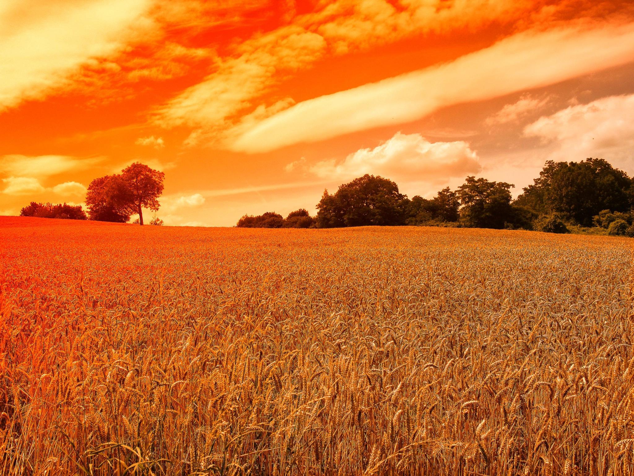 Photo in Random #wheat field #color #from the past #jan degen