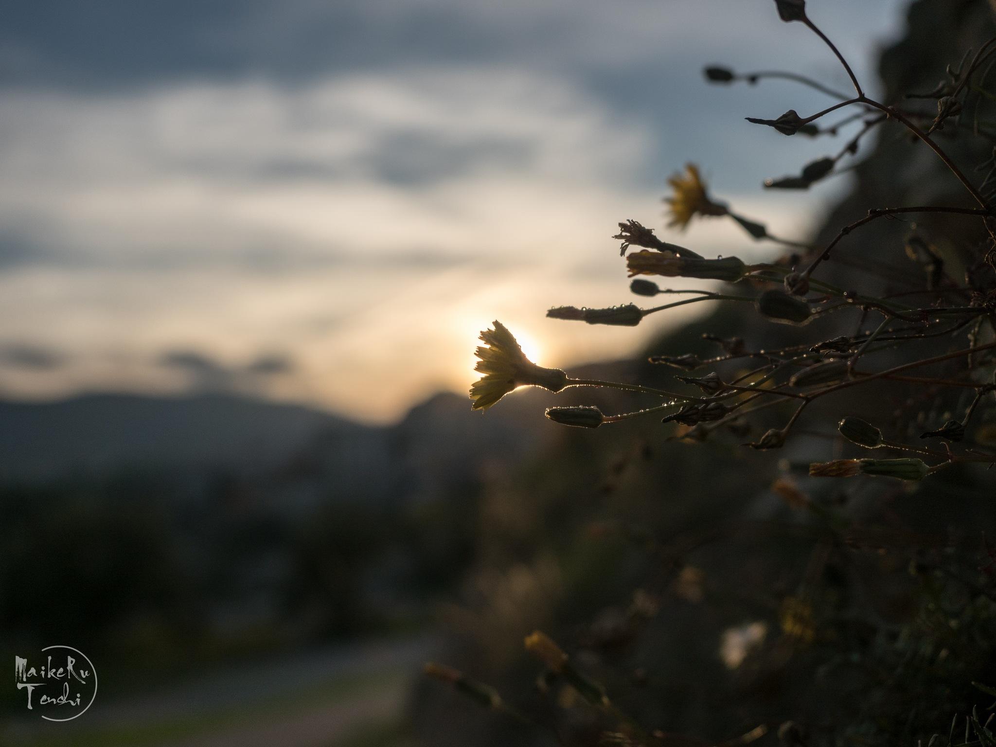 Autumm Sunset. by Maikeru Tenshi