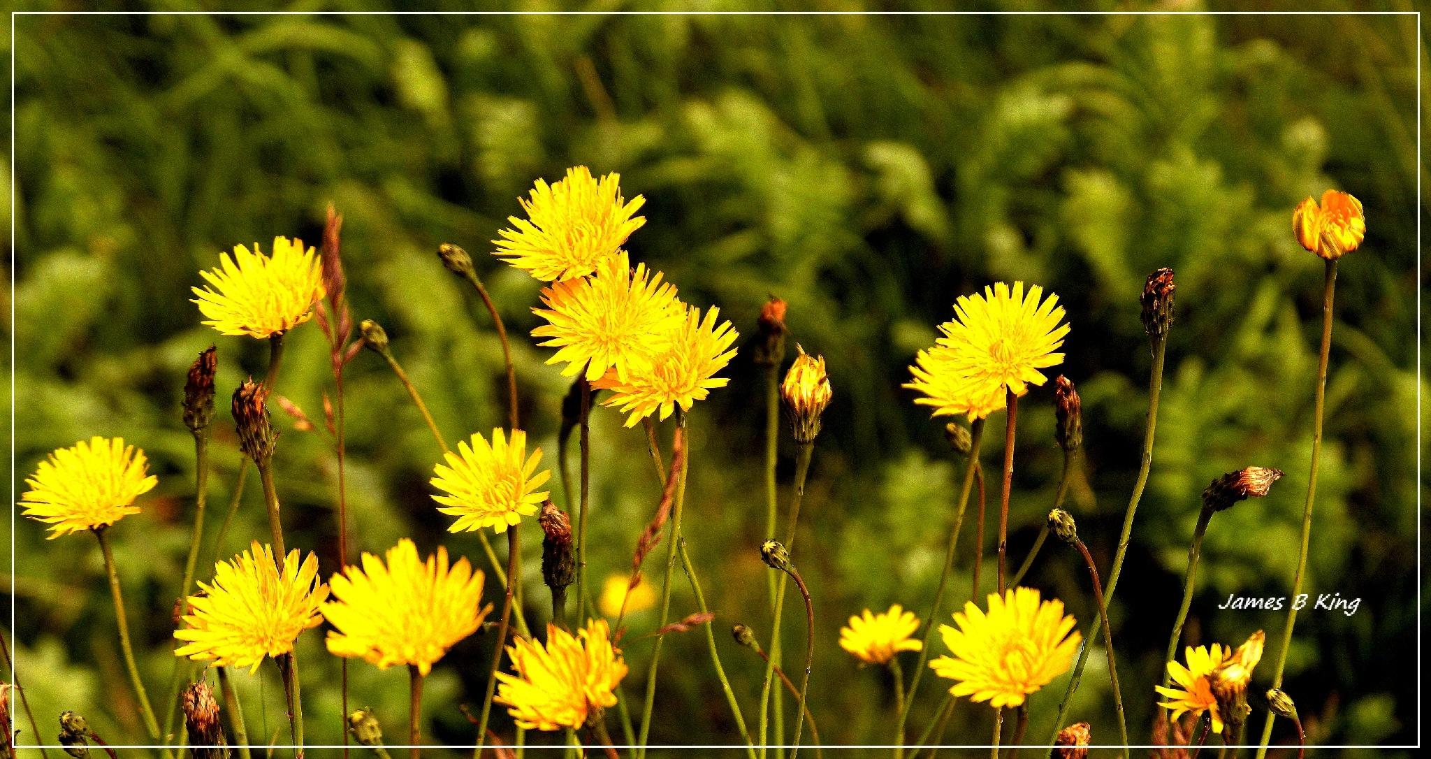 Yellow by James Bullis-King