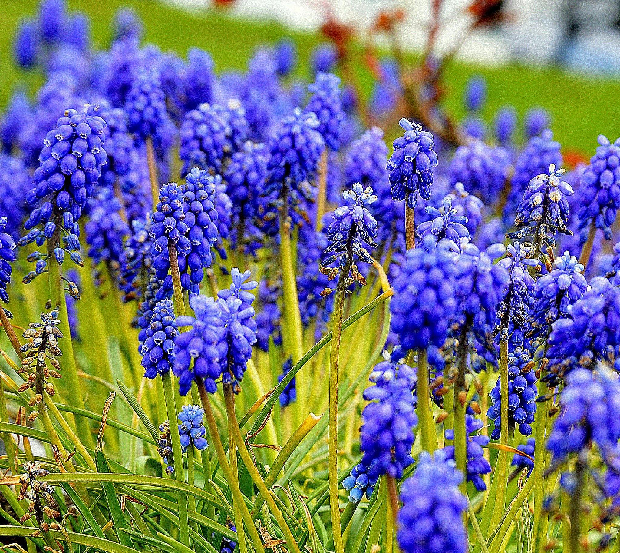Flowers by James Bullis-King