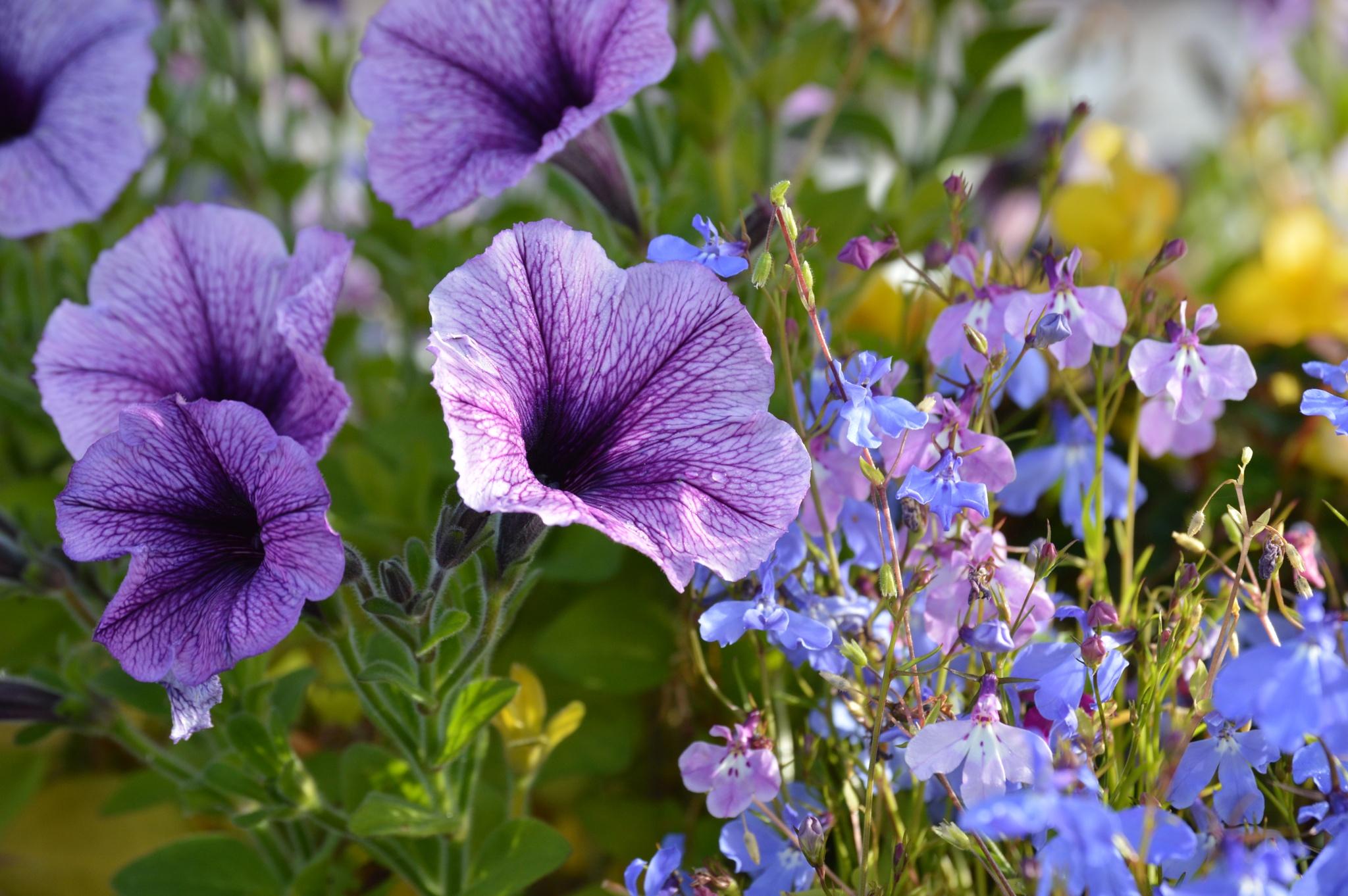 Beautiful Flowers by James Bullis-King
