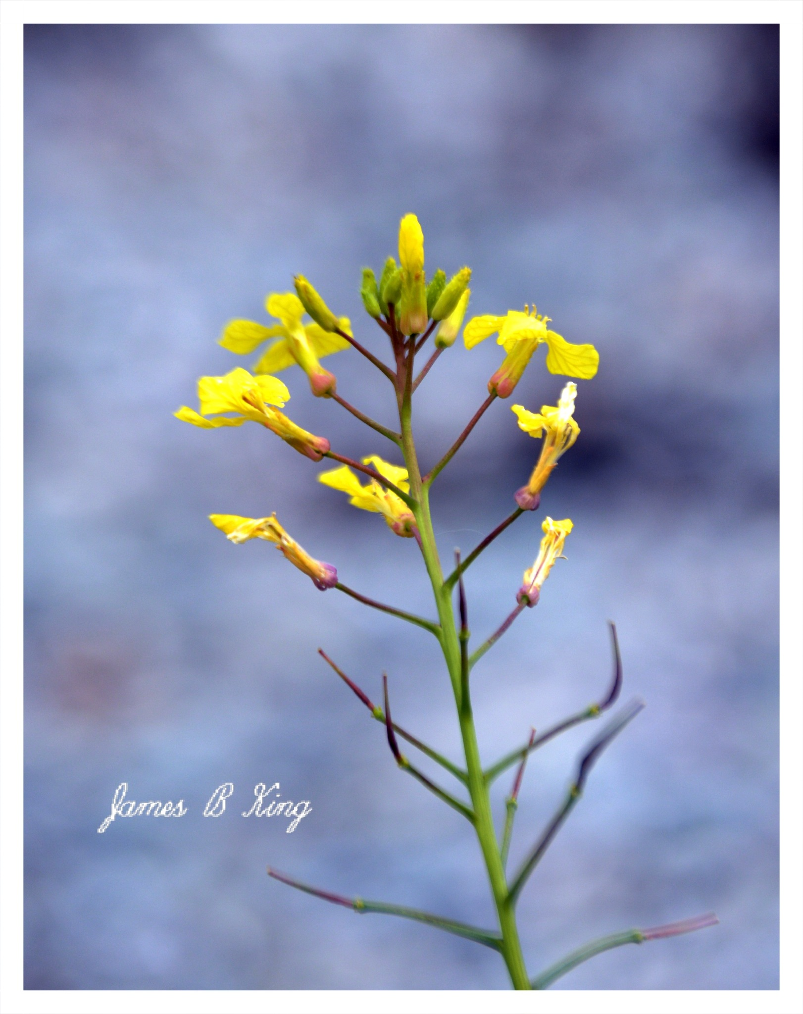 Flower by the Sea by James Bullis-King