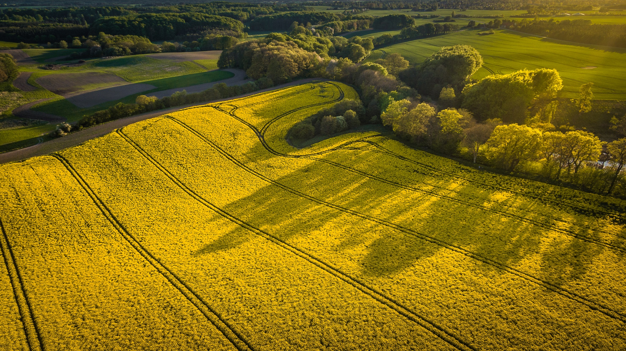 Sunset over rapeseed fields by Michael B. Rasmussen