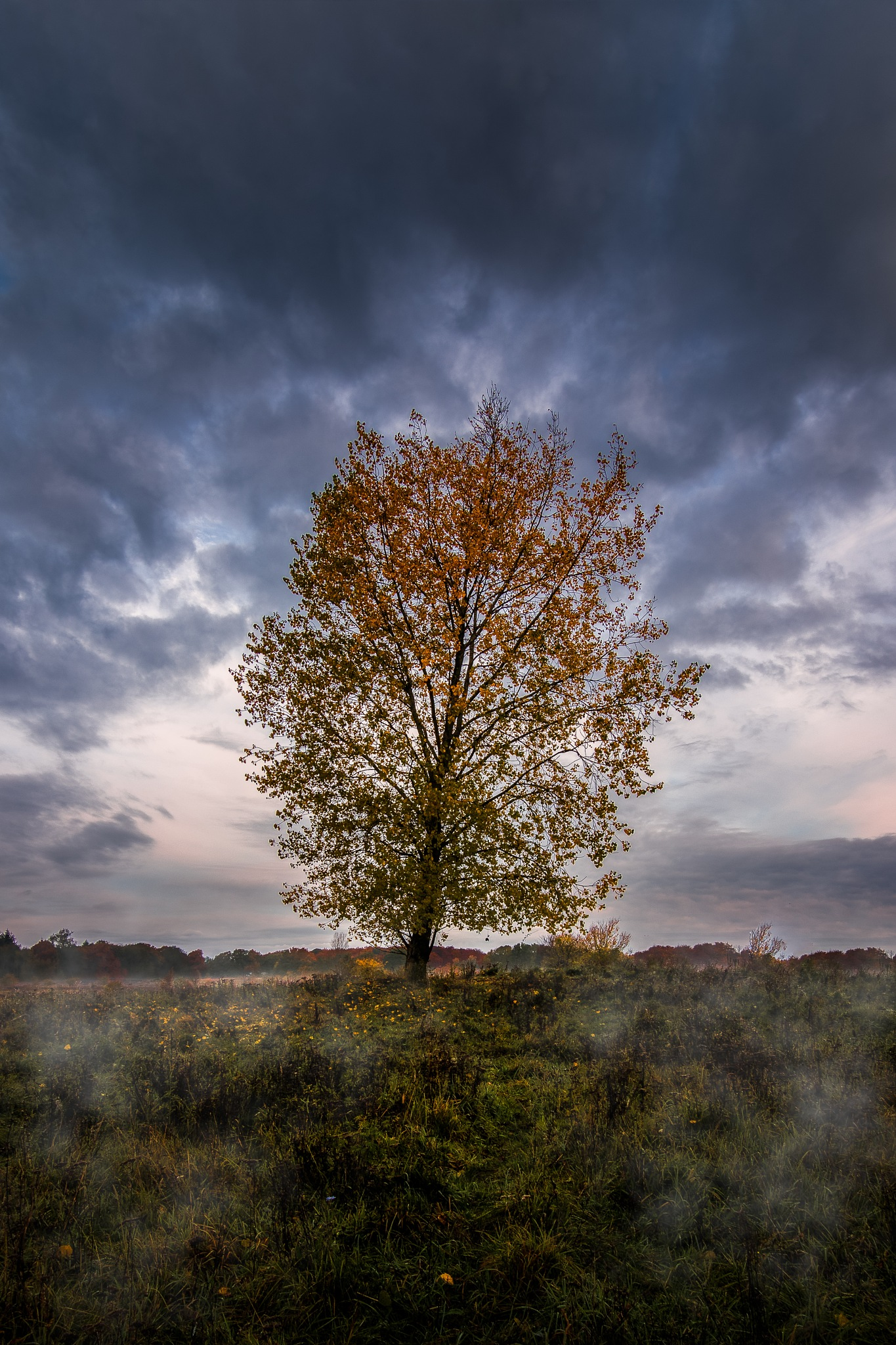 The tree by Michael B. Rasmussen
