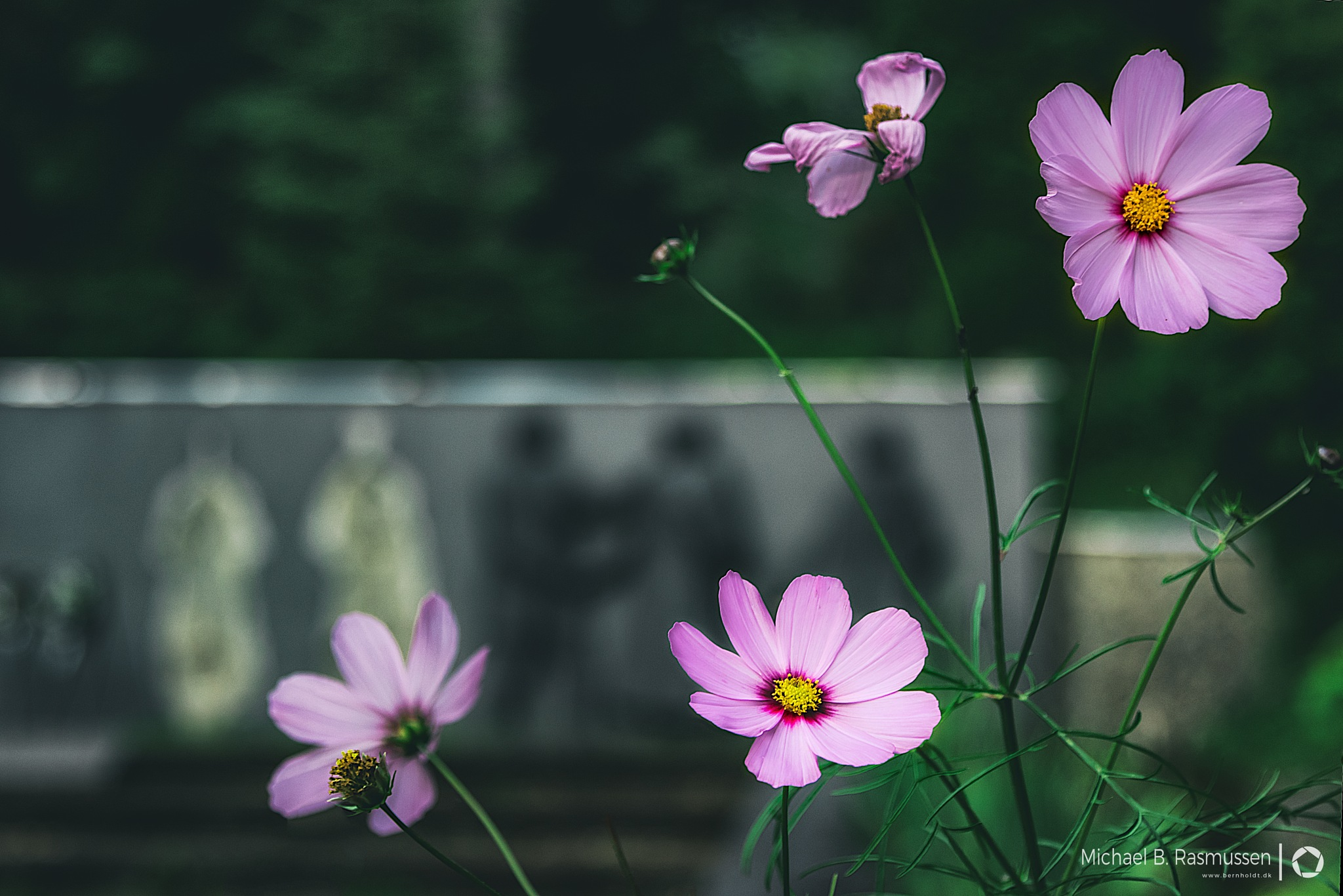 Some pink flowers by Michael B. Rasmussen