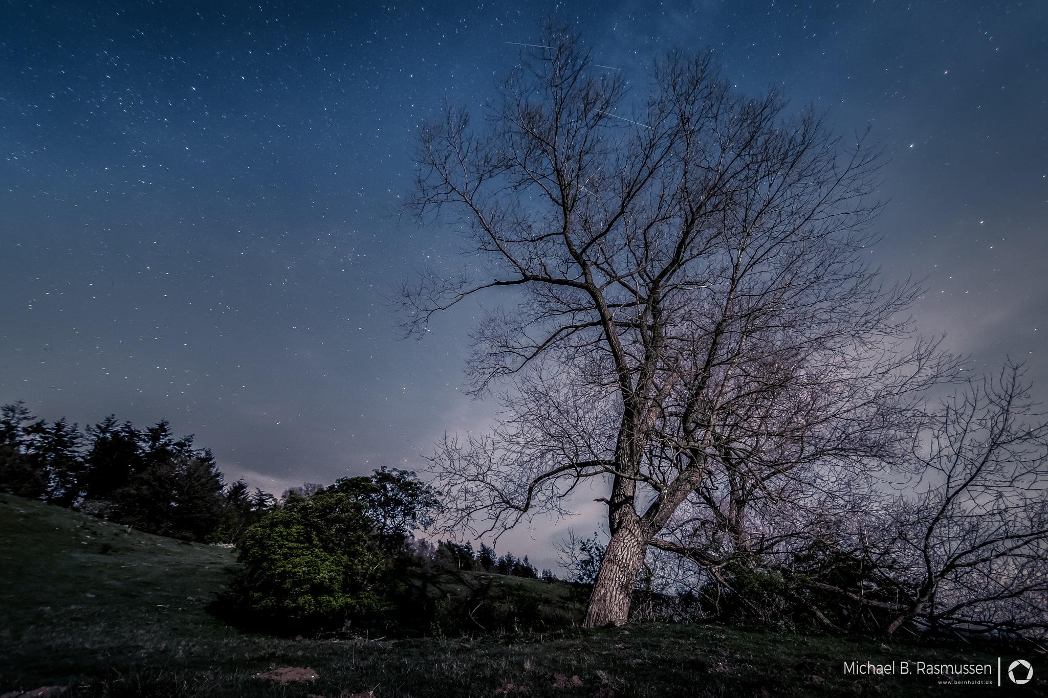 Meteors oover the tree by Michael B. Rasmussen