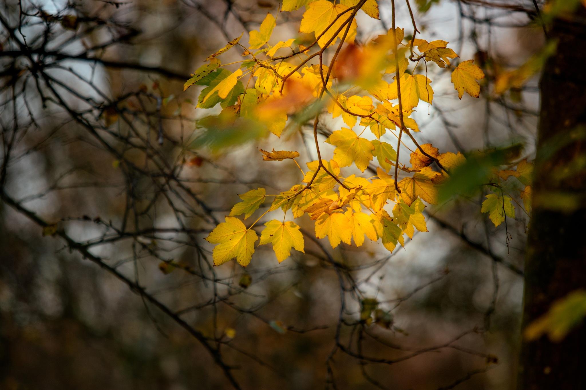 Autumn in the bog by Michael B. Rasmussen