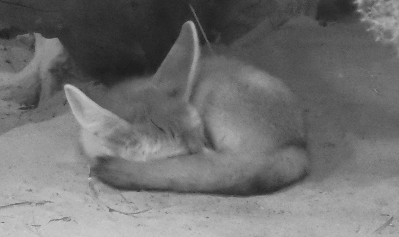 nap time by gillian.burden