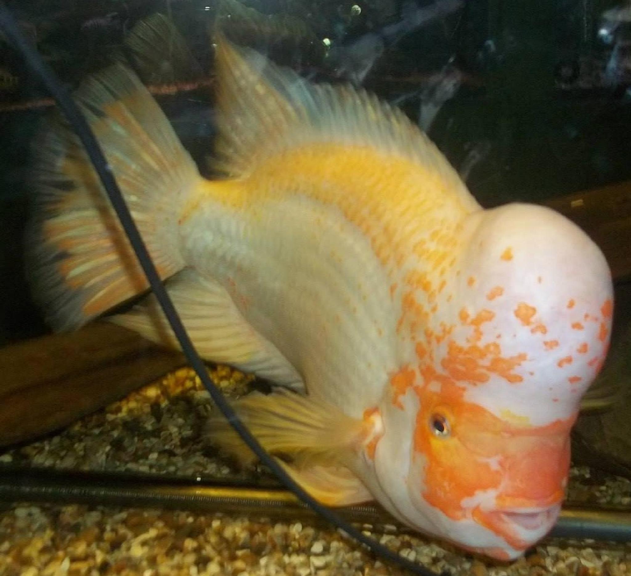fish by gillian.burden