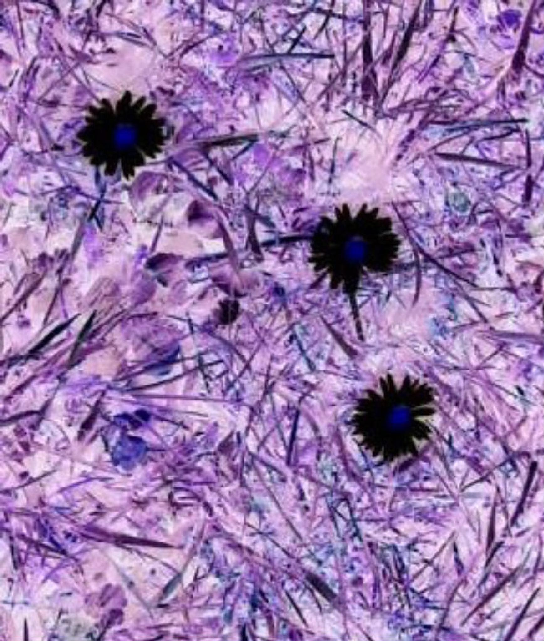 inverted daisies  by gillian.burden
