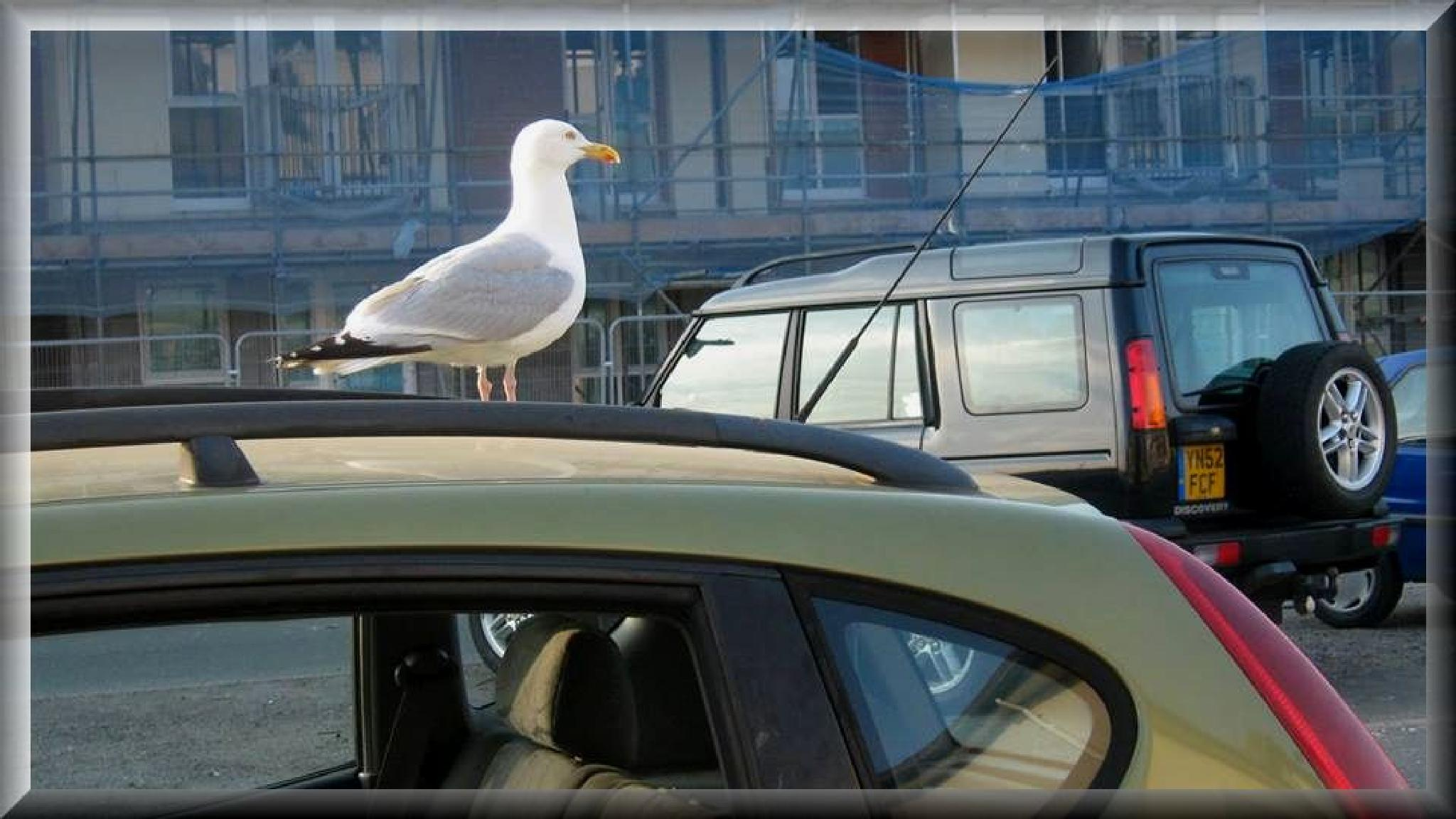Seagull.. by Janine