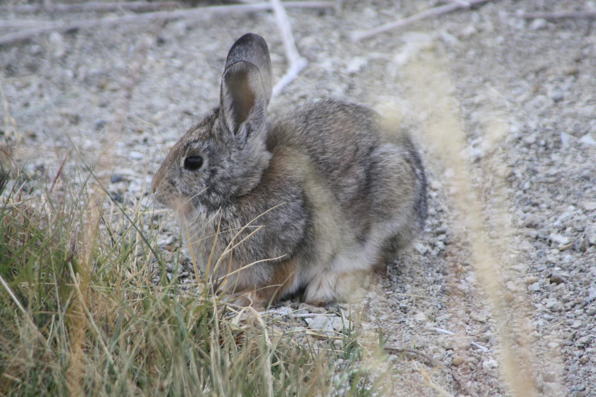 Rabbit by peyton0104