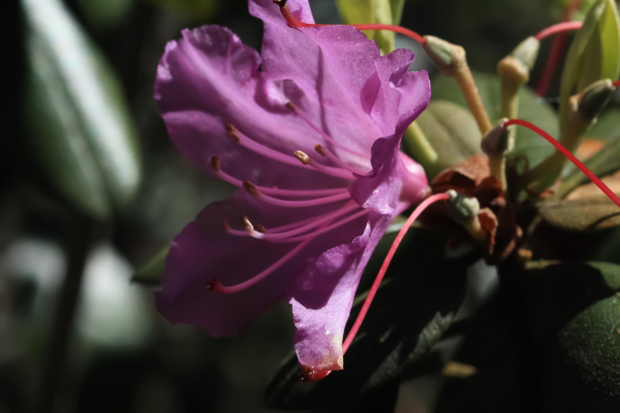 Flower in bloom by peyton0104