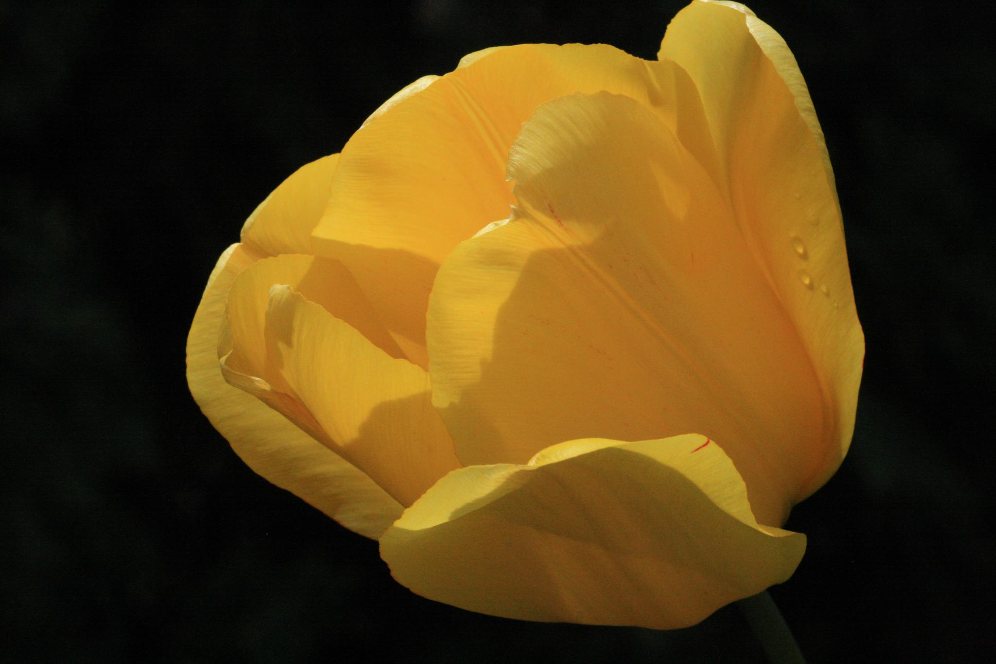 Yellow shadows by peyton0104