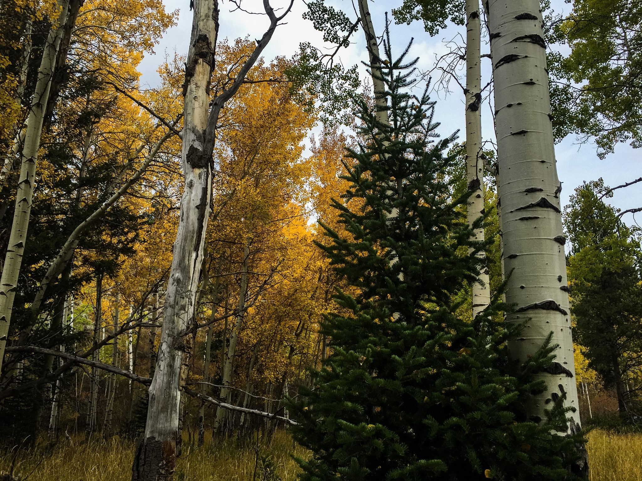 christmas in the aspens by peyton0104
