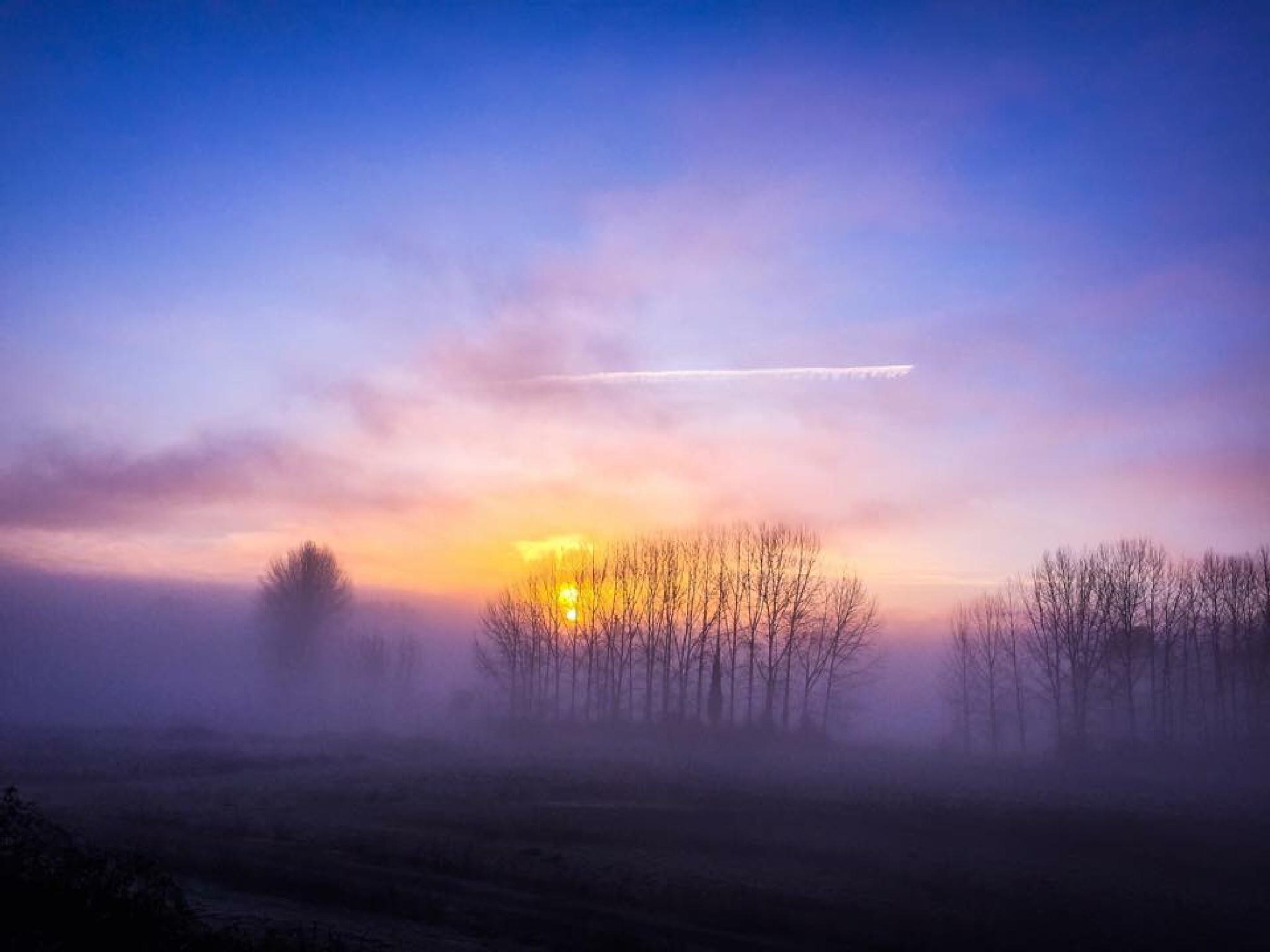 Foggy morning by peyton0104
