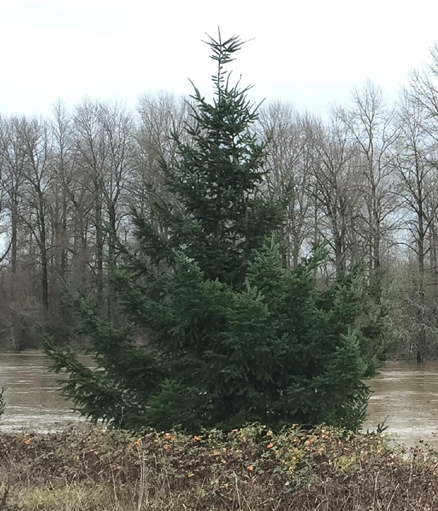 Christmas Tree by peyton0104