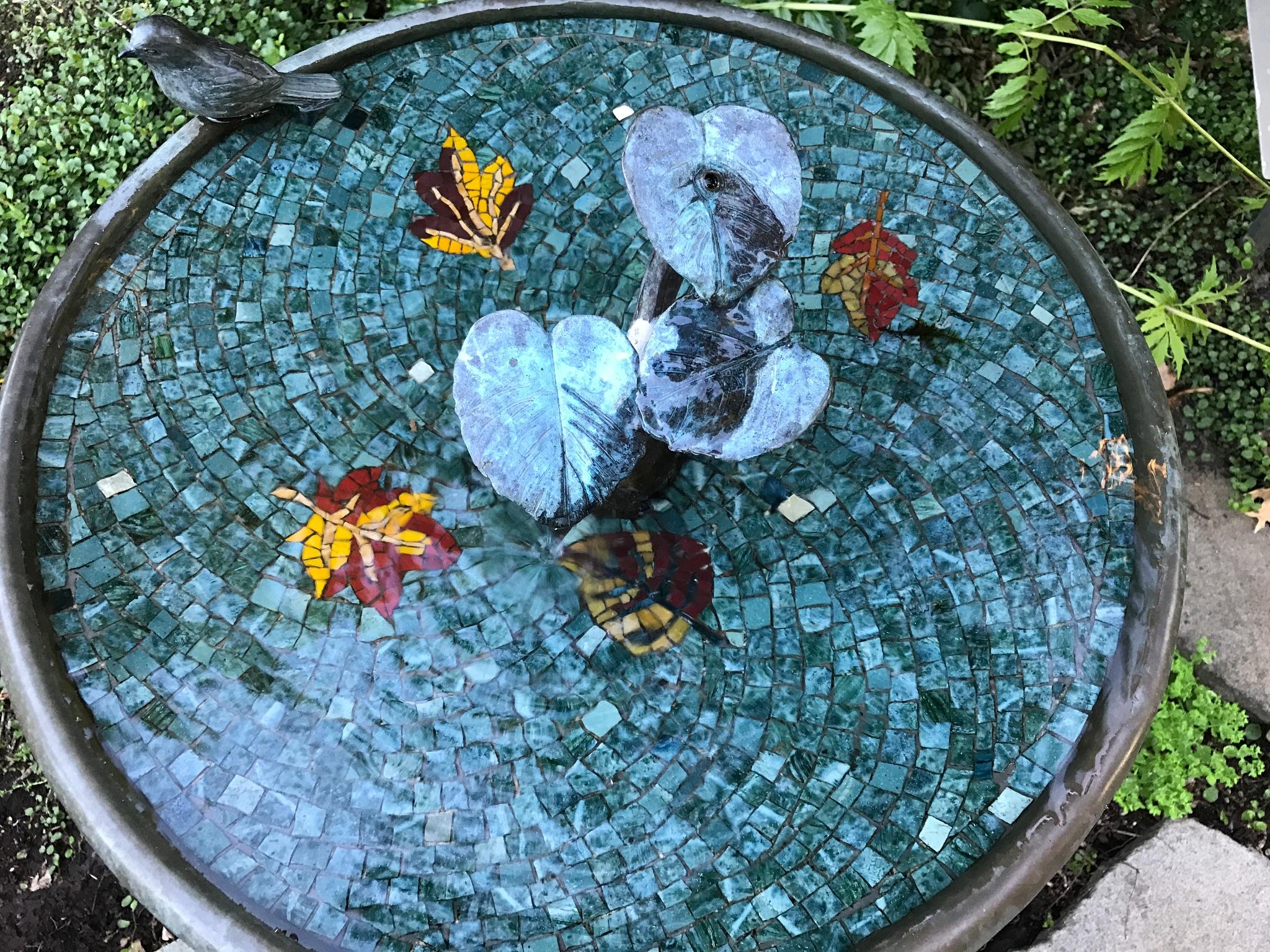 Bird Bath by peyton0104