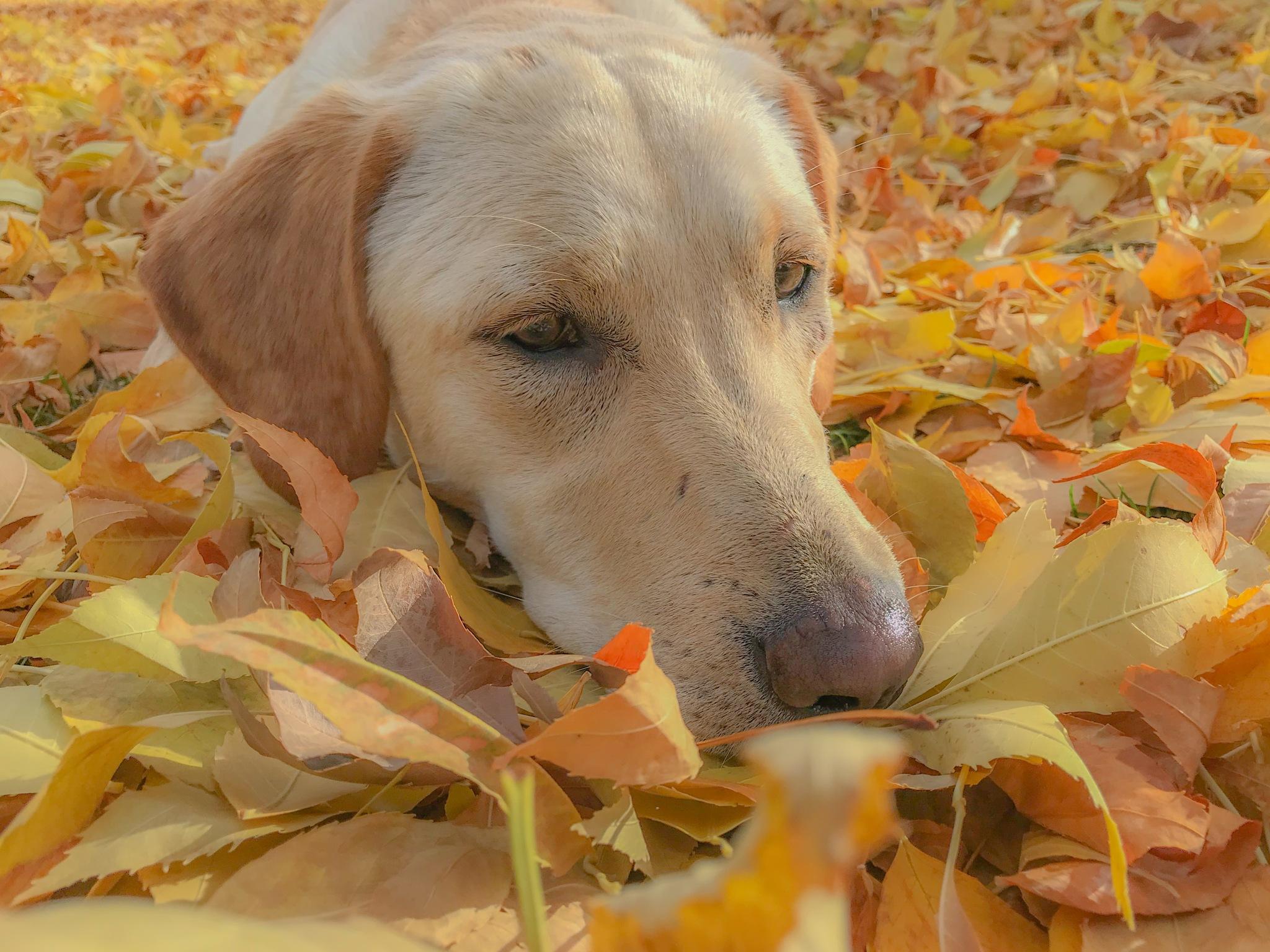 carpet of leaves by peyton0104
