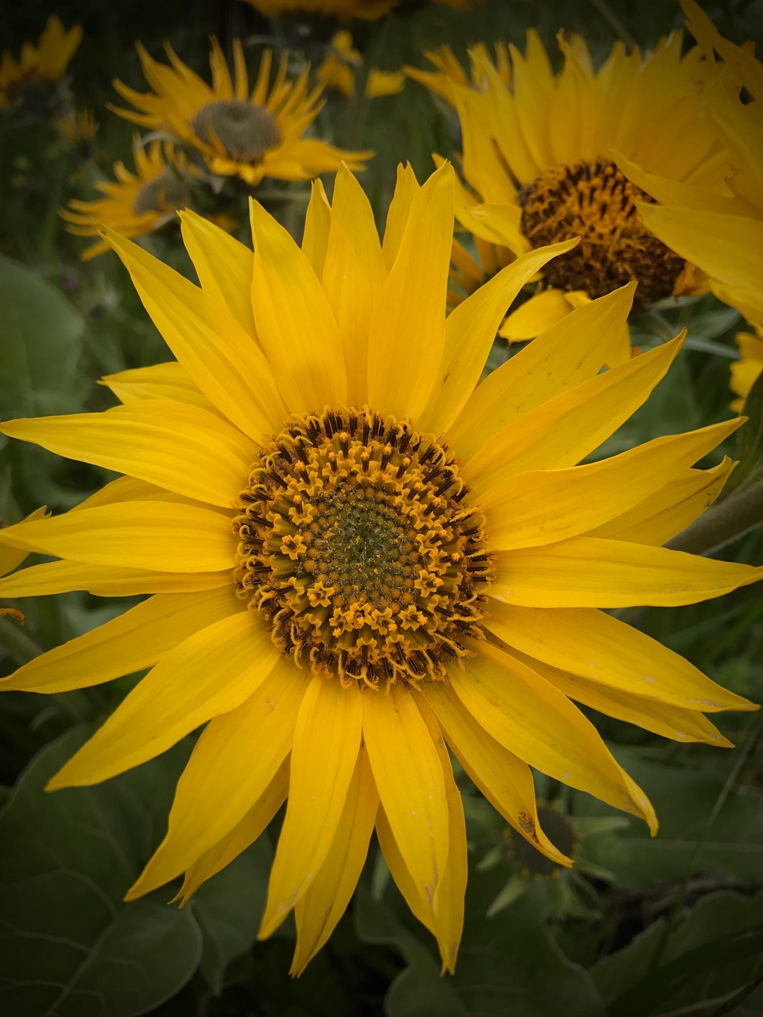 Wild flowers by peyton0104